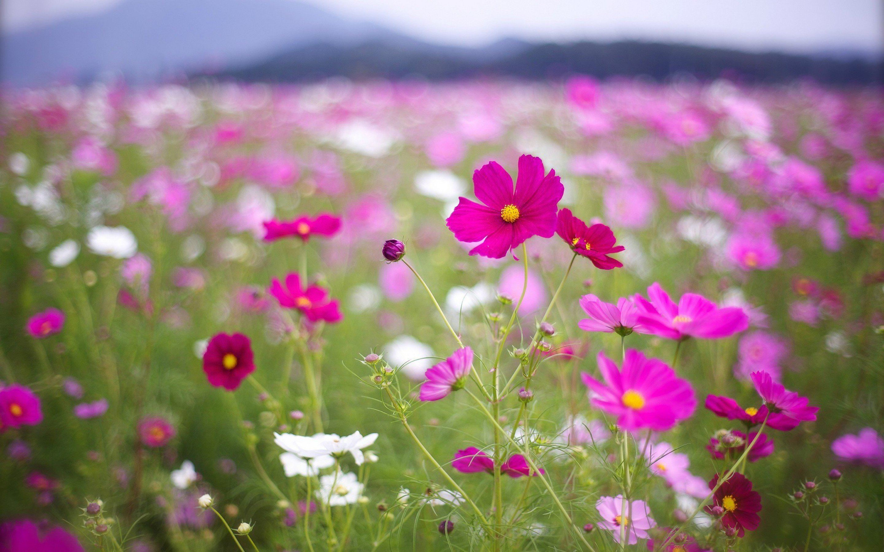 Free Photo Pink Flower Field Growth Flowers Field Free