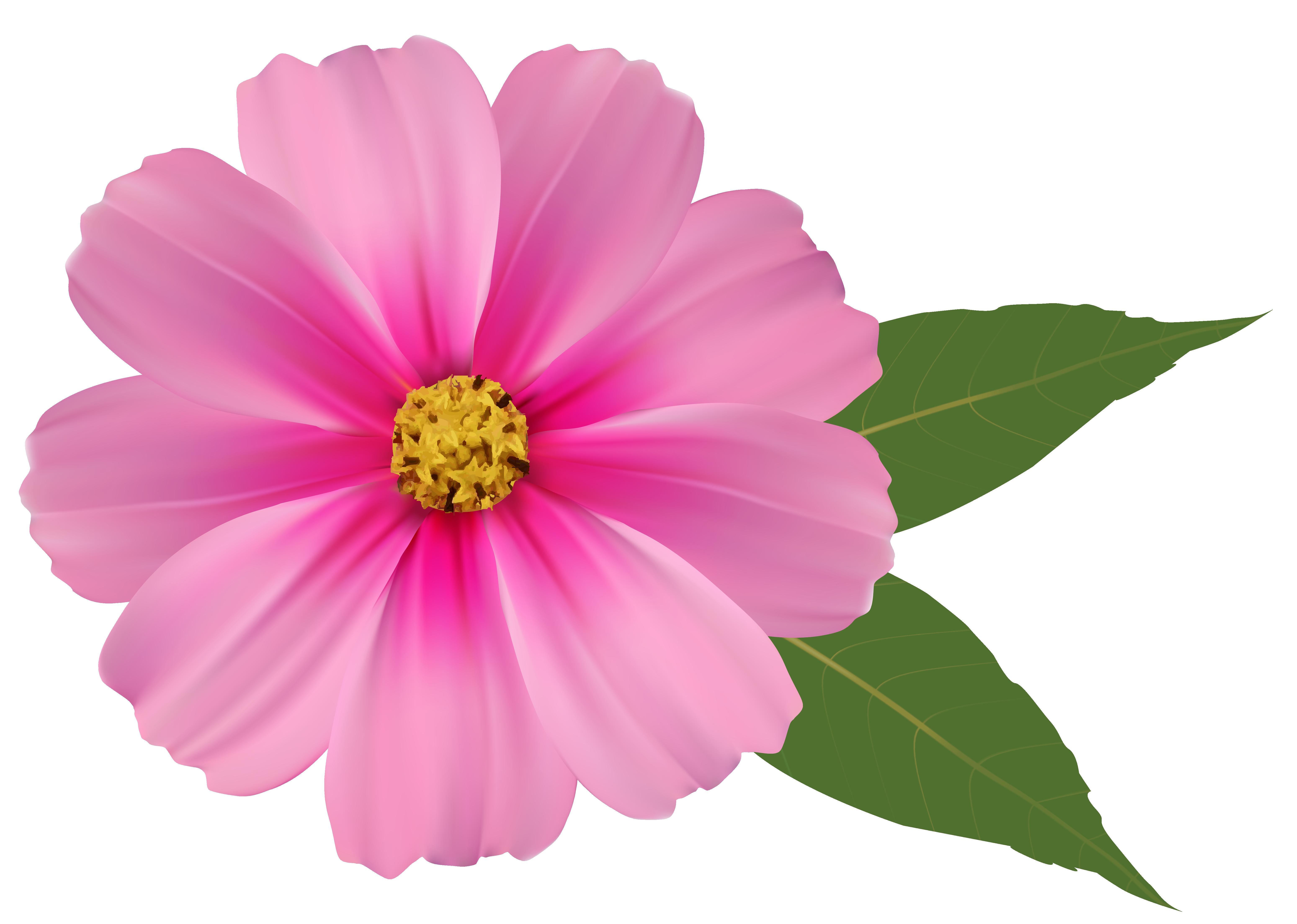 Free Photo Pink Flower Rose Spring Wild Free Download Jooinn