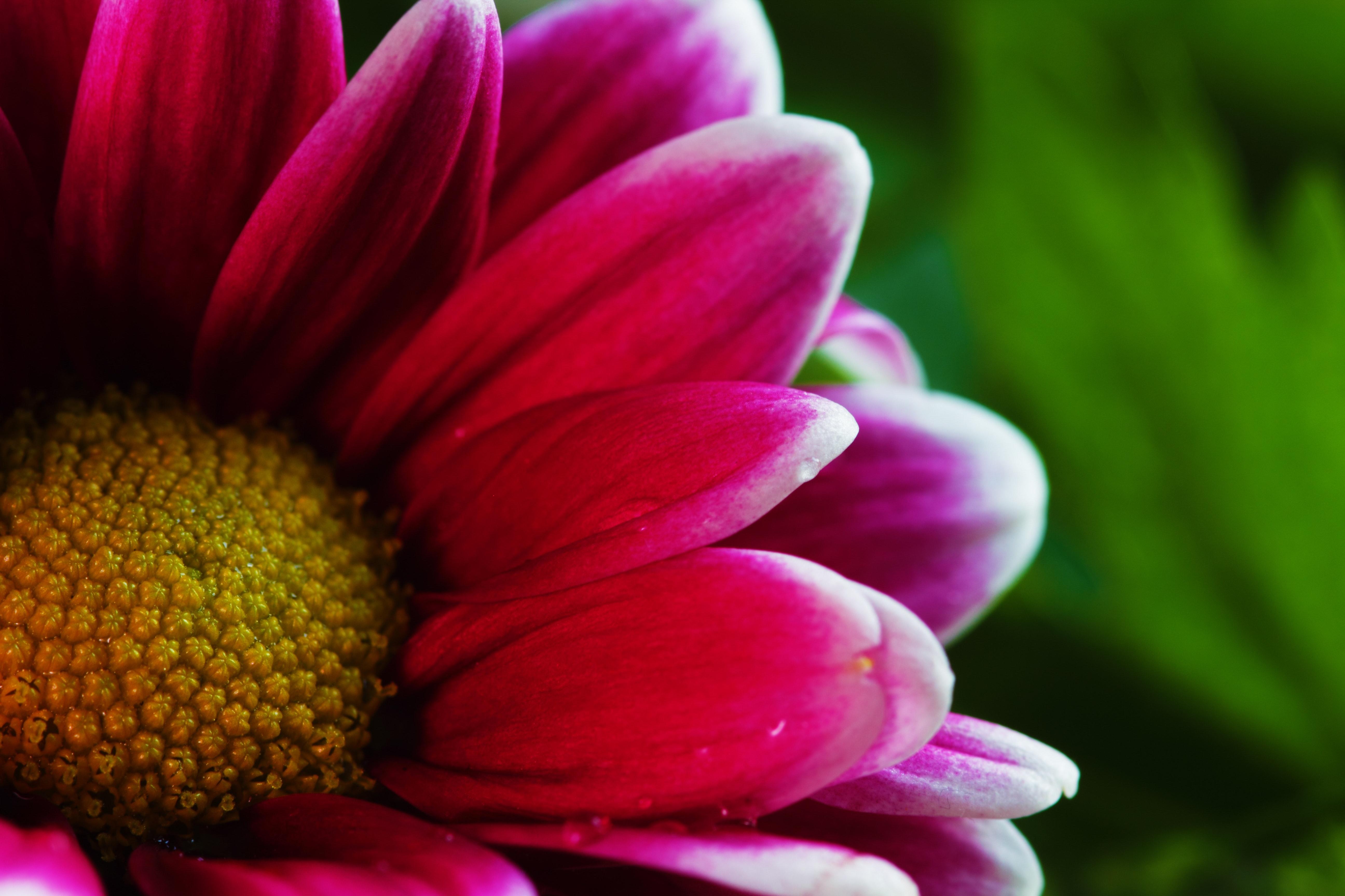 Pink Flower Photo, Beautiful, Flower, Vivid, Summer, HQ Photo