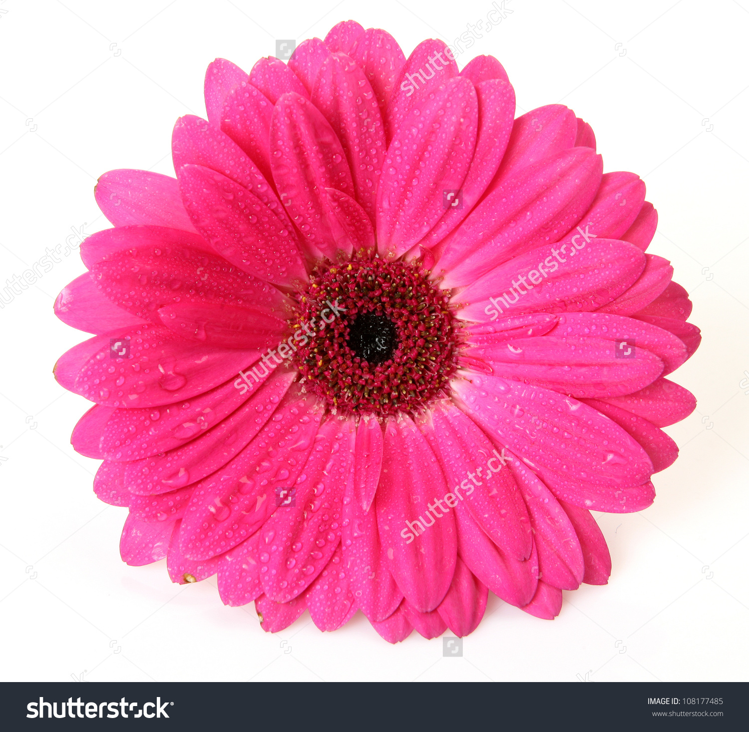 Free Photo Pink Flower Pink Plant Flower Free Download Jooinn