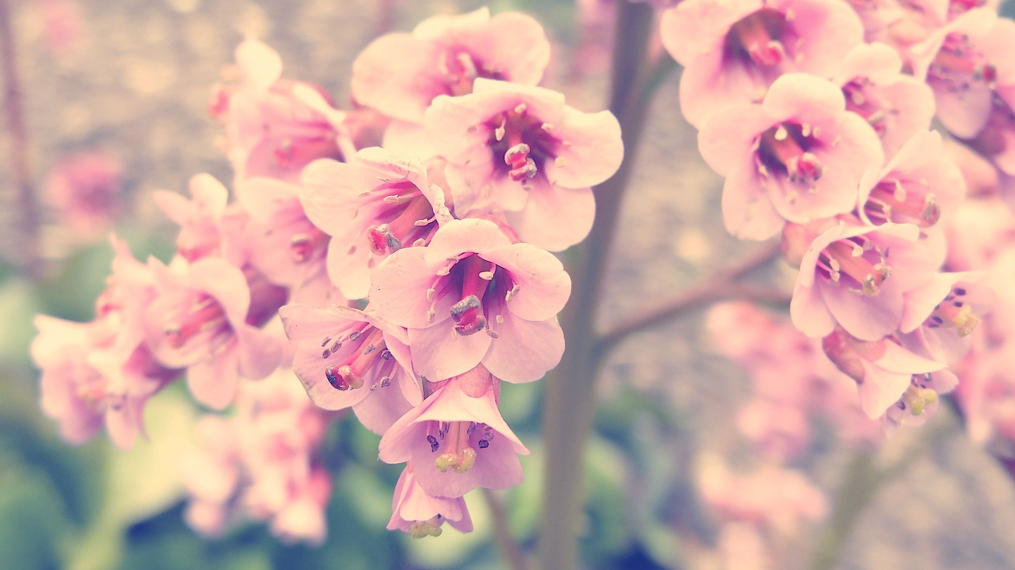 Vintage Pink Flower Photography Hd Pictures 4 HD Wallpapers ...