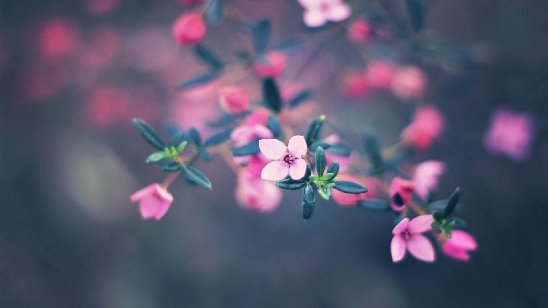 Cute pink flower photography wallpaper | (87228)