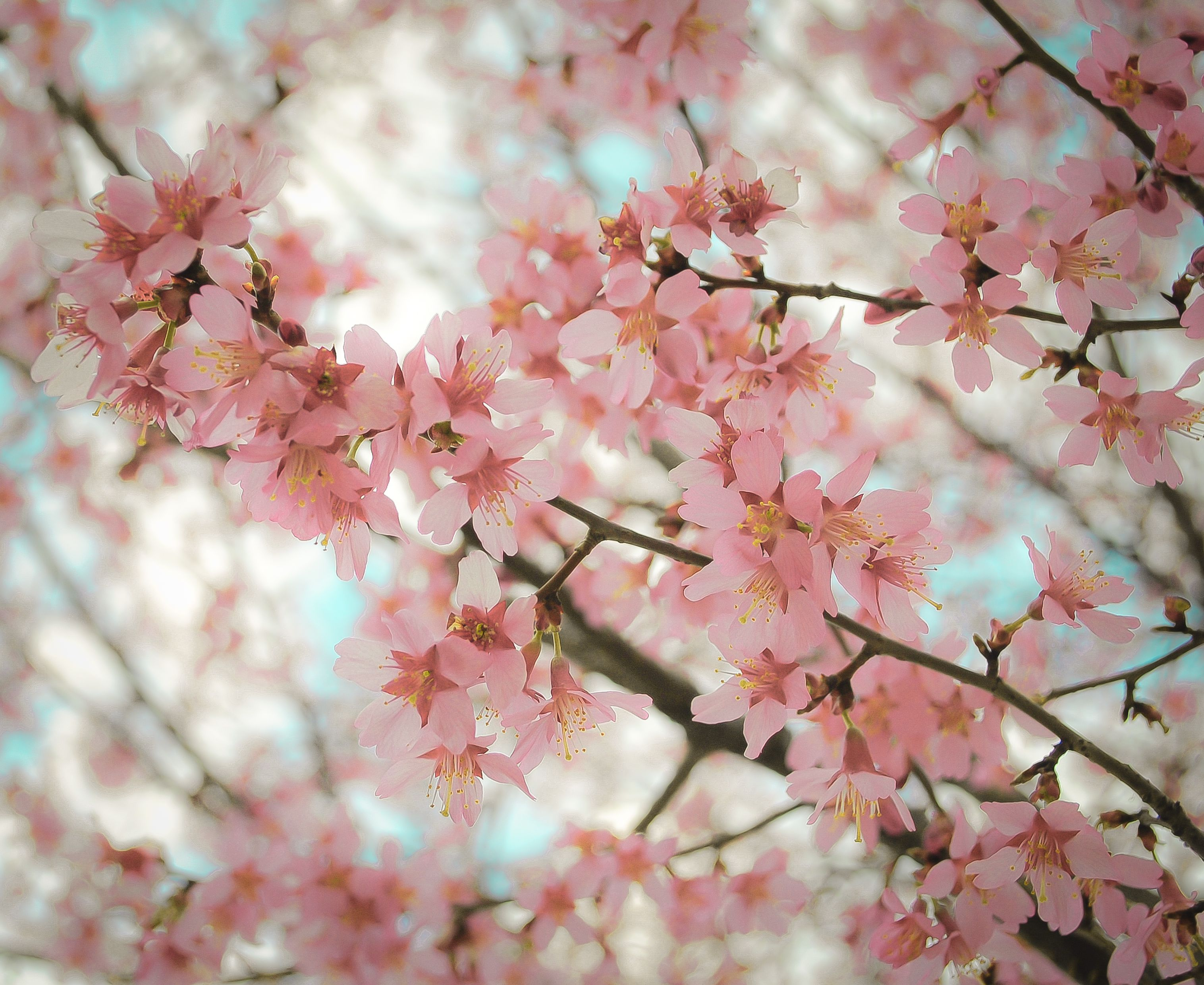 Pink Flowers Tumblr Photography Hd Images 3 HD Wallpapers | Tumblr ...