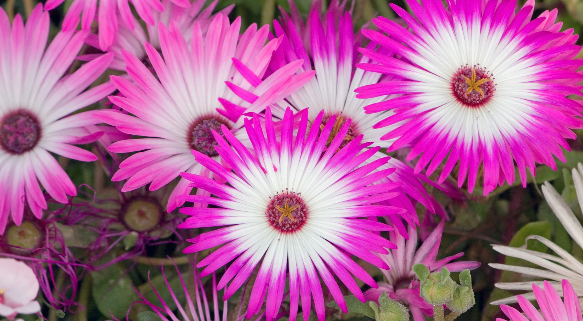 Free Photo Pink Flowers Pink Red Park Free Download Jooinn