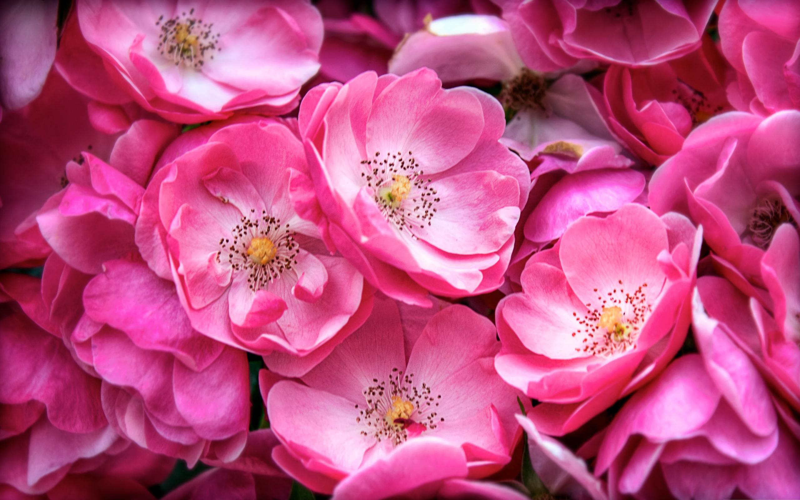 Free Photo Pink Flower Pink Plant Petal Free Download Jooinn