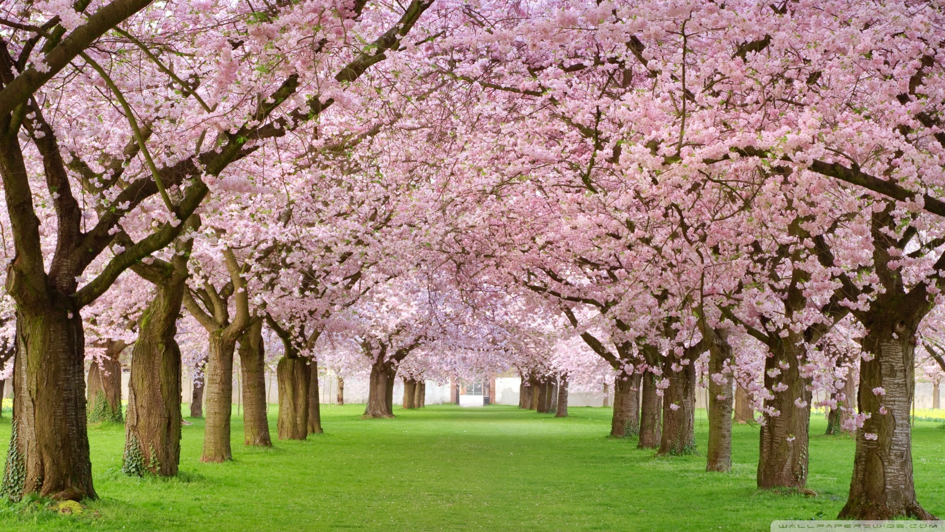 Free Photo Pink Flowers White Summer Pink Free Download Jooinn