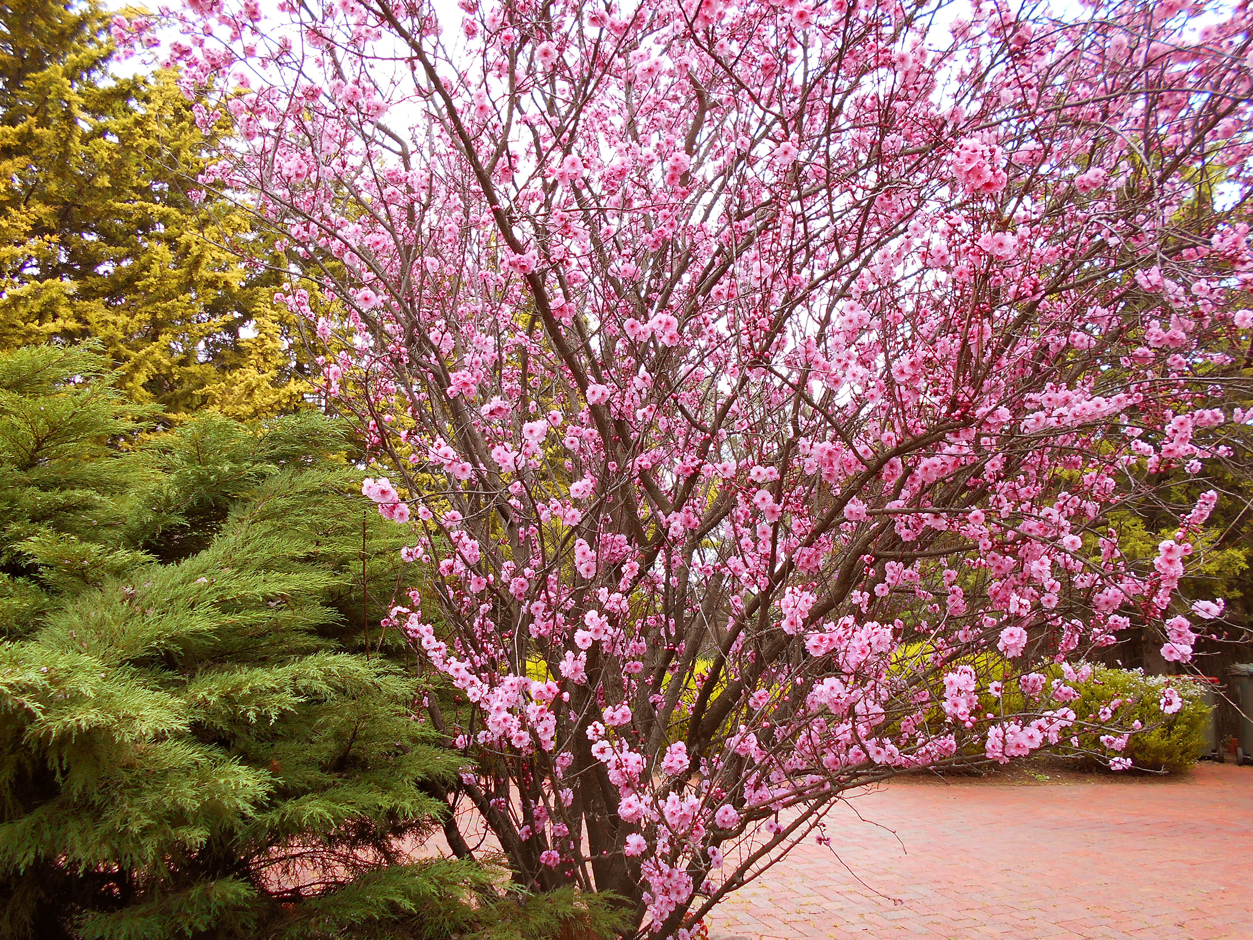 Free Photo Pink Flowers Pink Summer Garden Free Download Jooinn