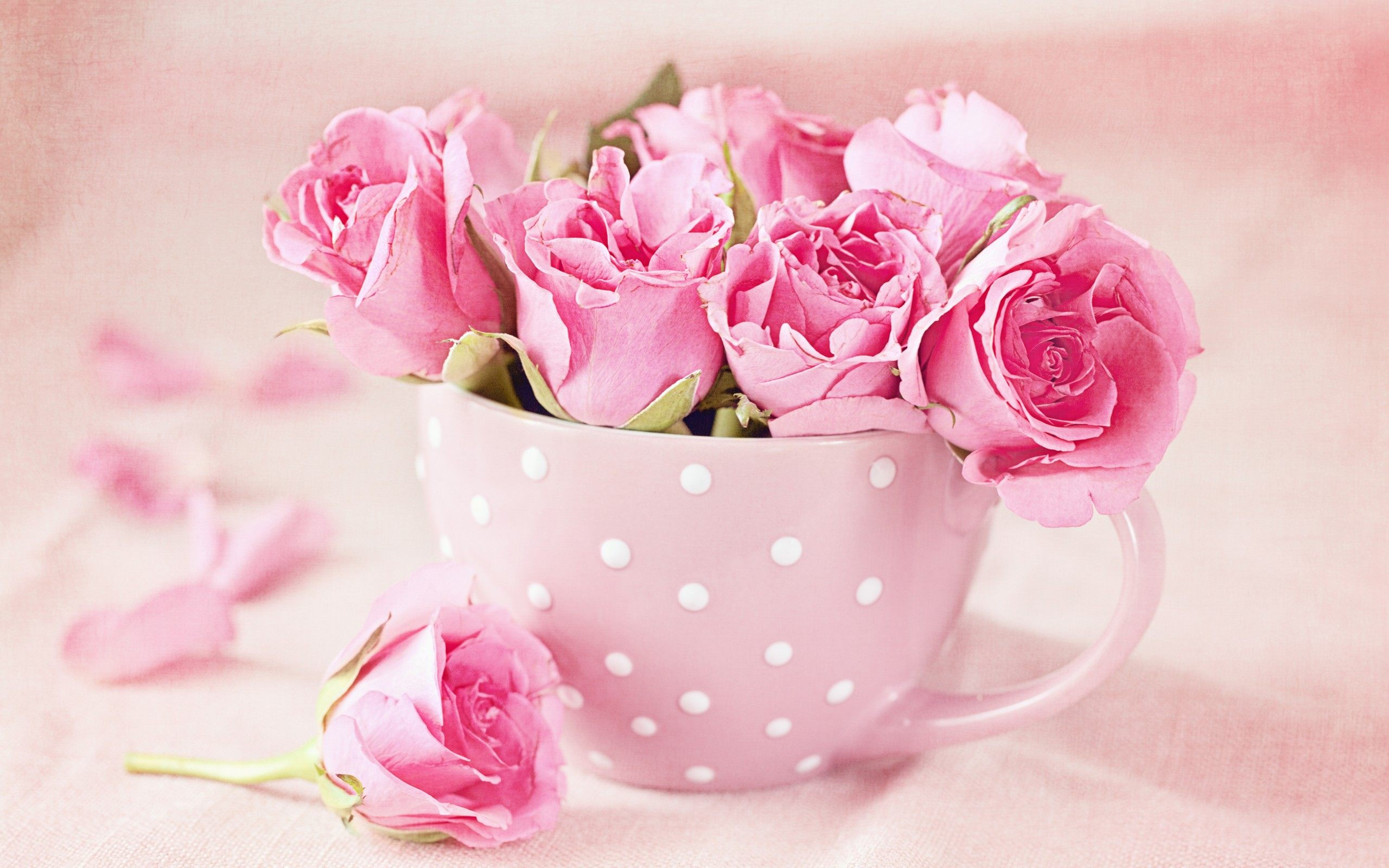 Pink Roses Images Group with 42 items
