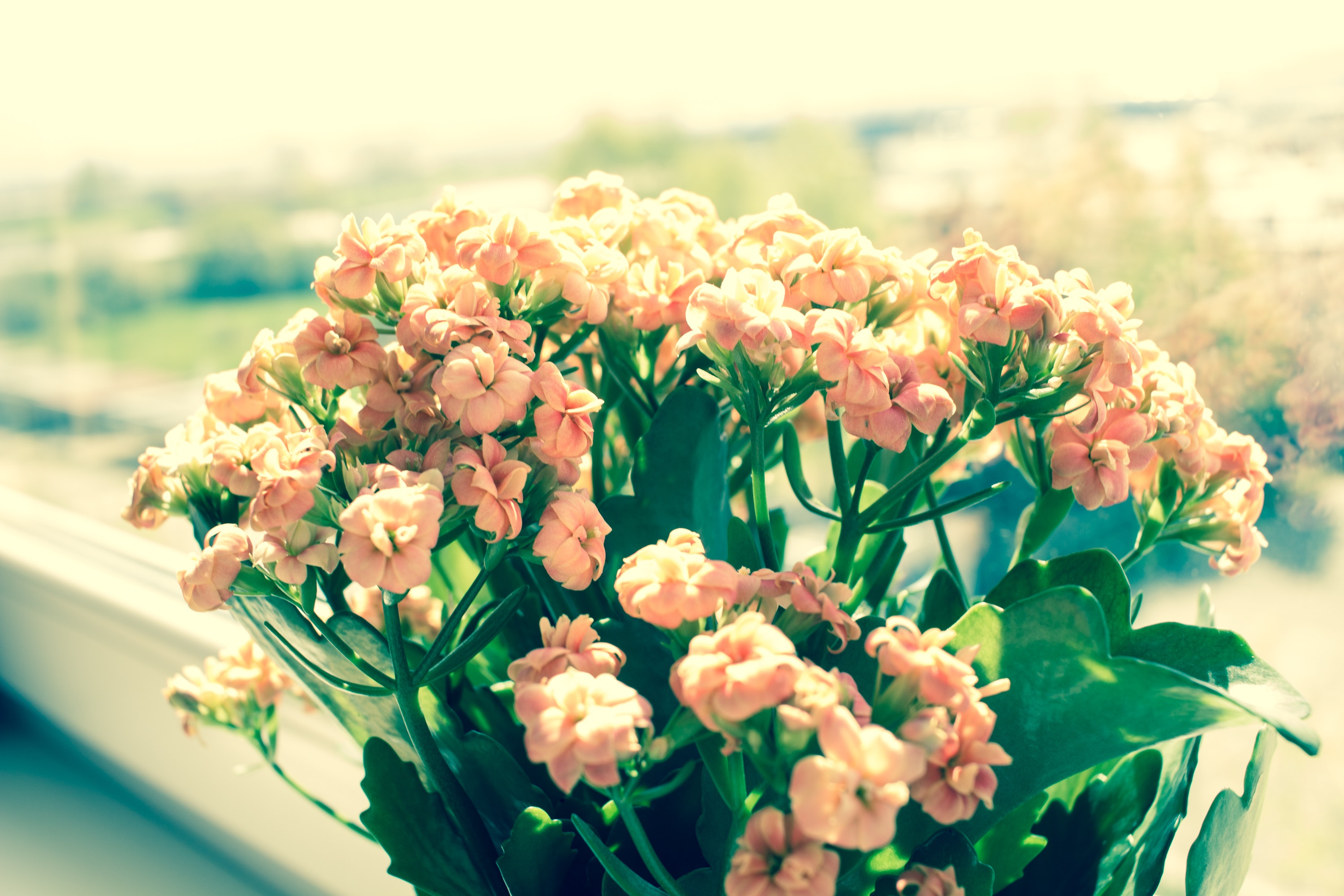 Pink flowers on green plants phptography photo