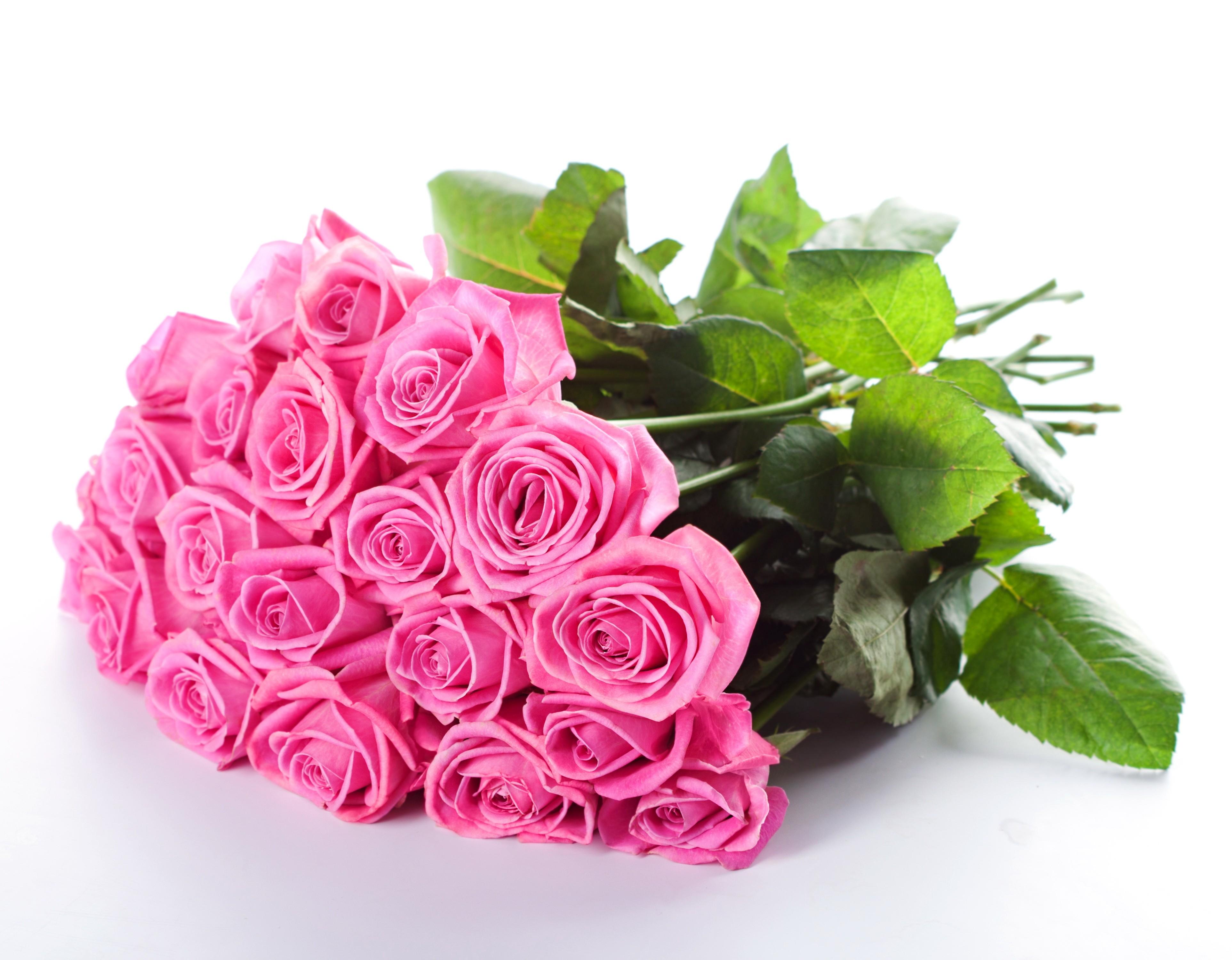 Free photo pink fresh flower garden nature fresh free pink fresh flower izmirmasajfo
