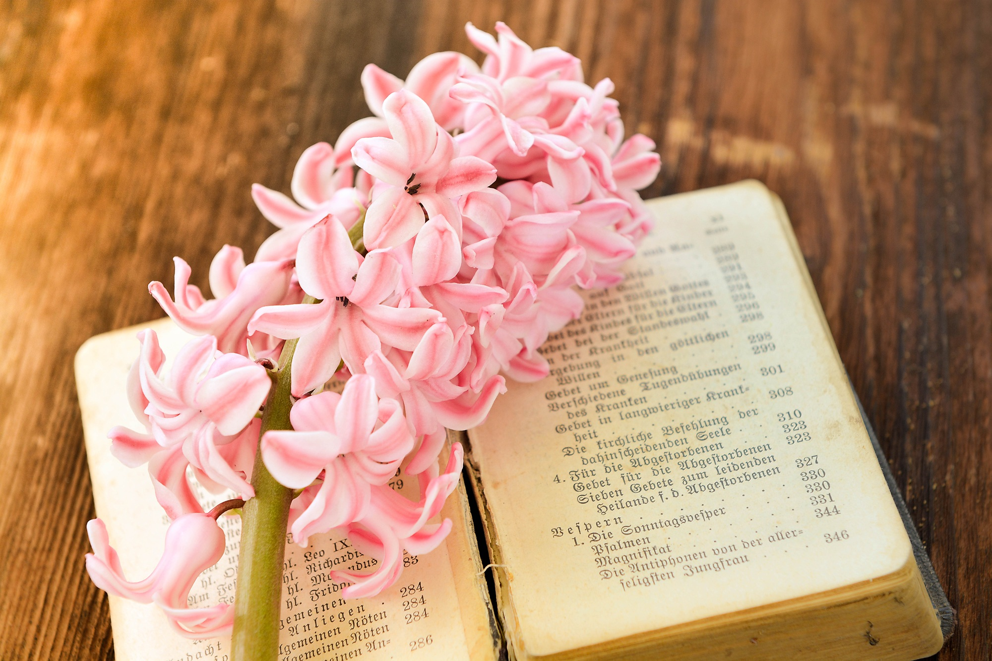 Pink Hyacinth, Bloom, Blooming, Book, Flower, HQ Photo