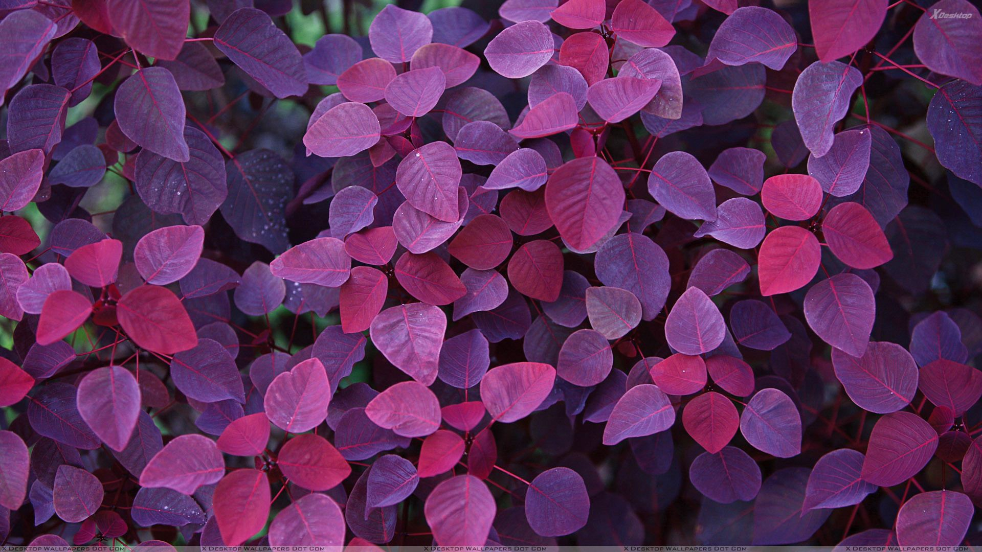 Pink Leaves Closeup Wallpaper