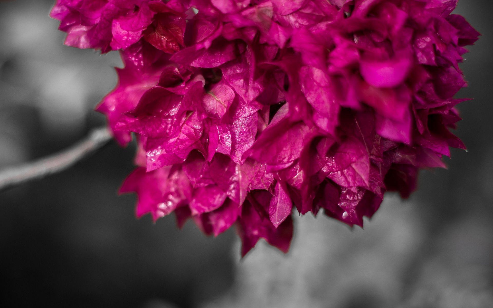 Pink leaves HD desktop wallpaper : Widescreen : High Definition ...