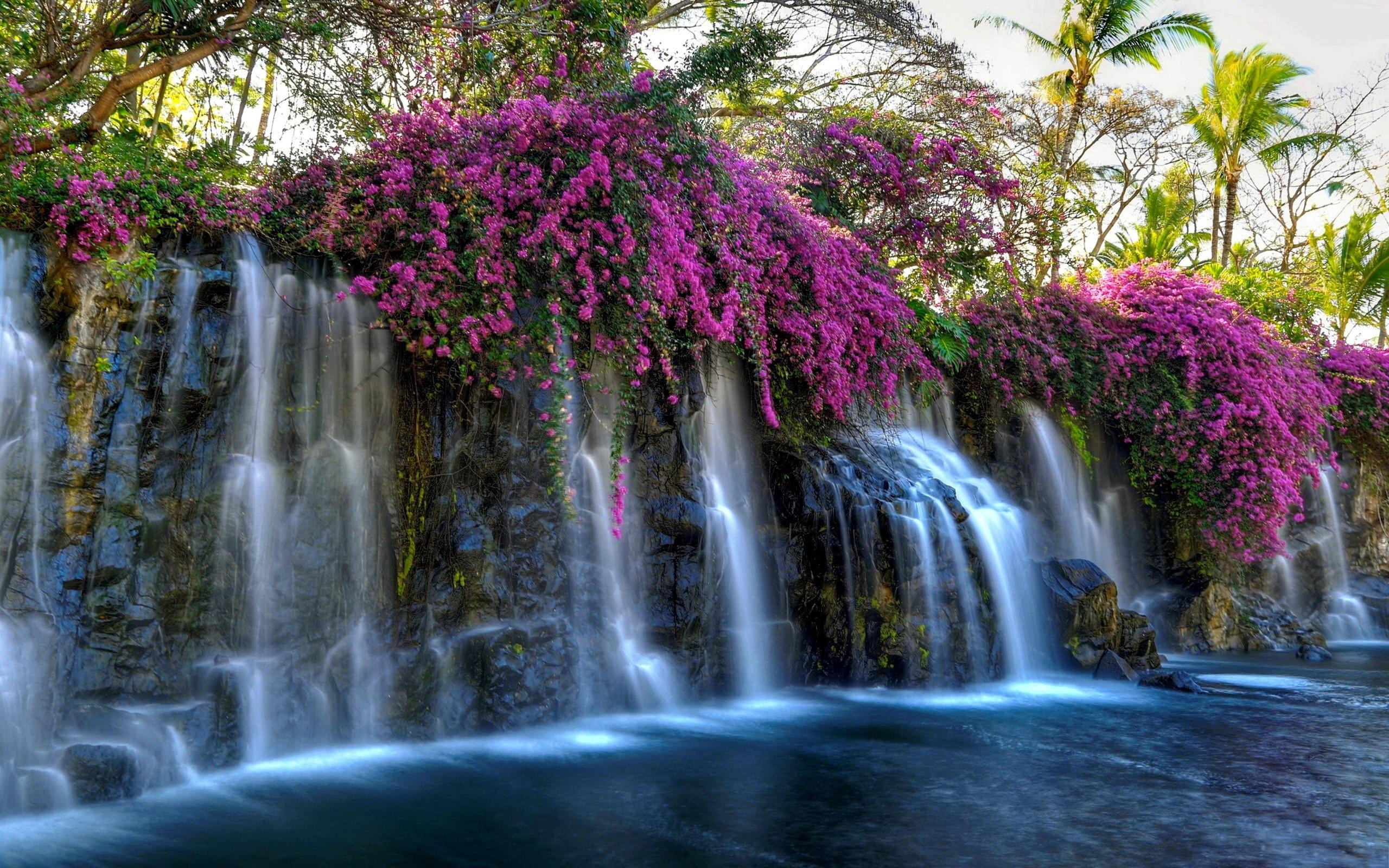 Download 2560x1600 Waterfall, Pink Flowers, Pond, Rocks, Moss ...