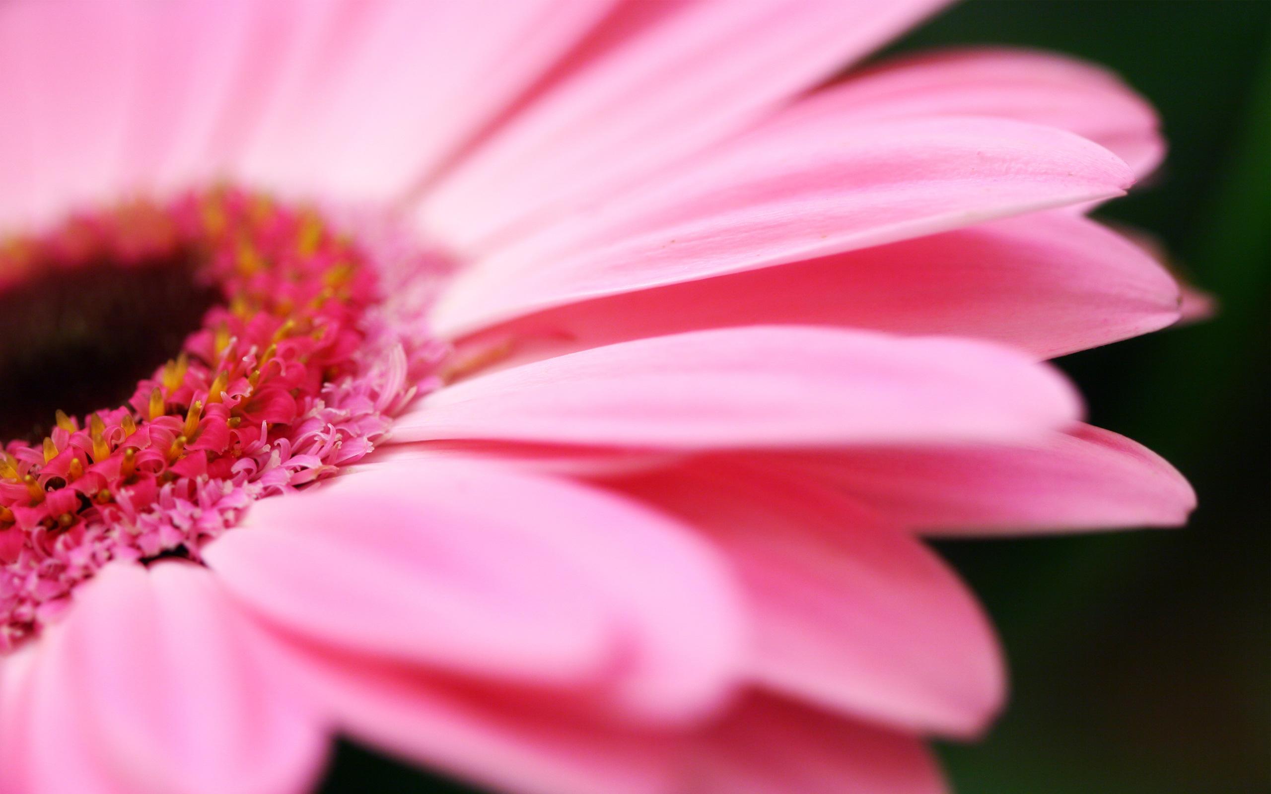 Flower Pink Petals Photo #6935960