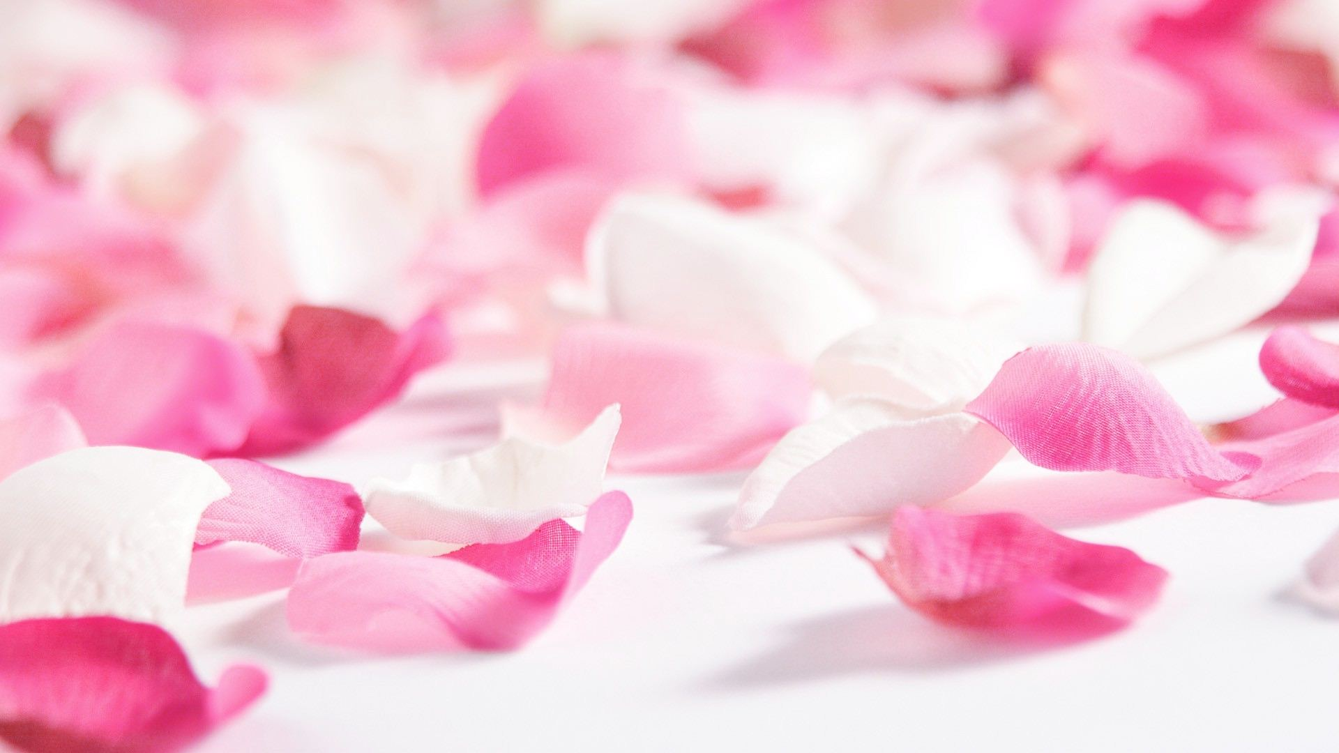 Flowers & Rose Petals Wallpapers HD Pictures – One HD Wallpaper ...