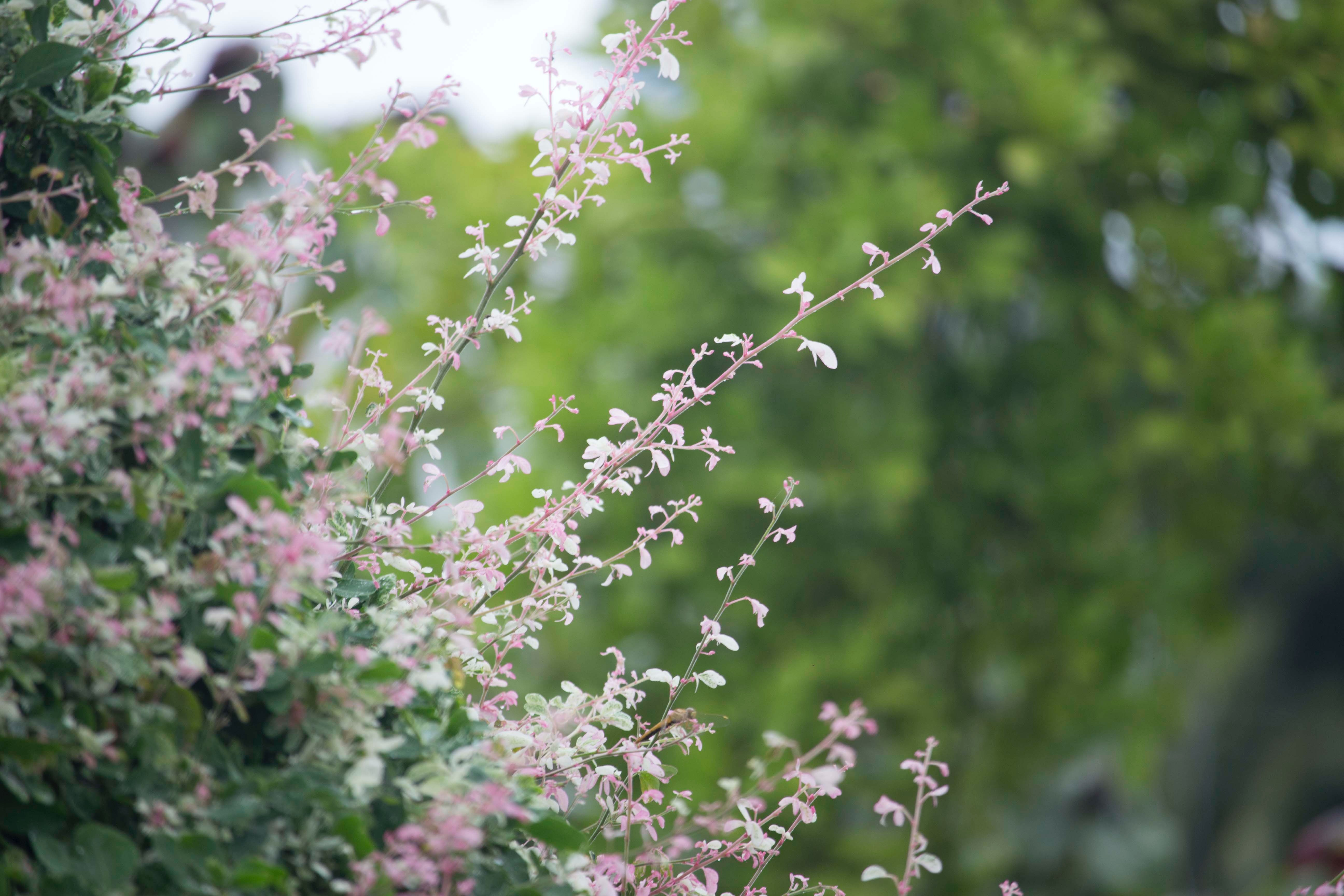 Pink petaled flower during daytime photo