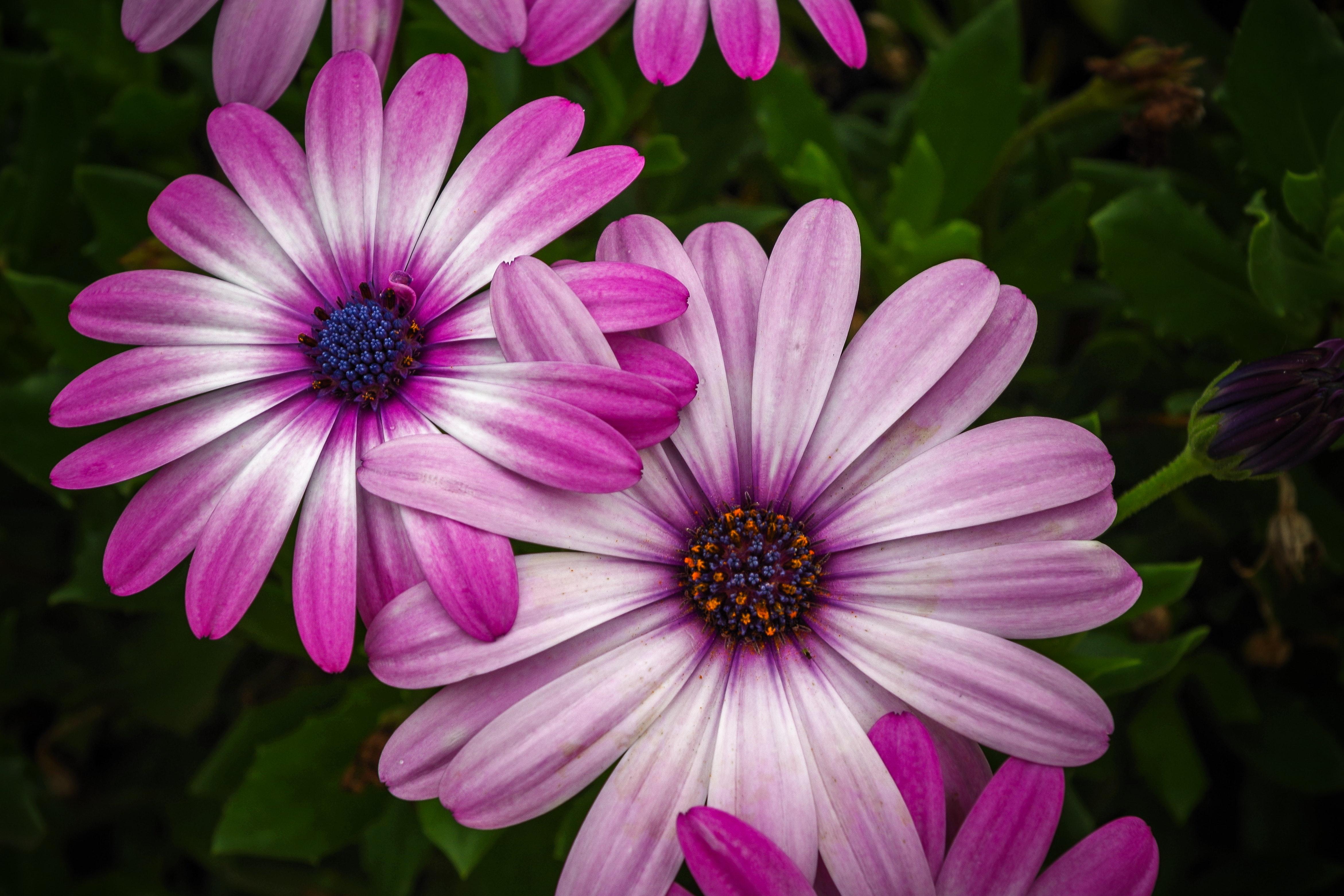 Pink petal flower photo