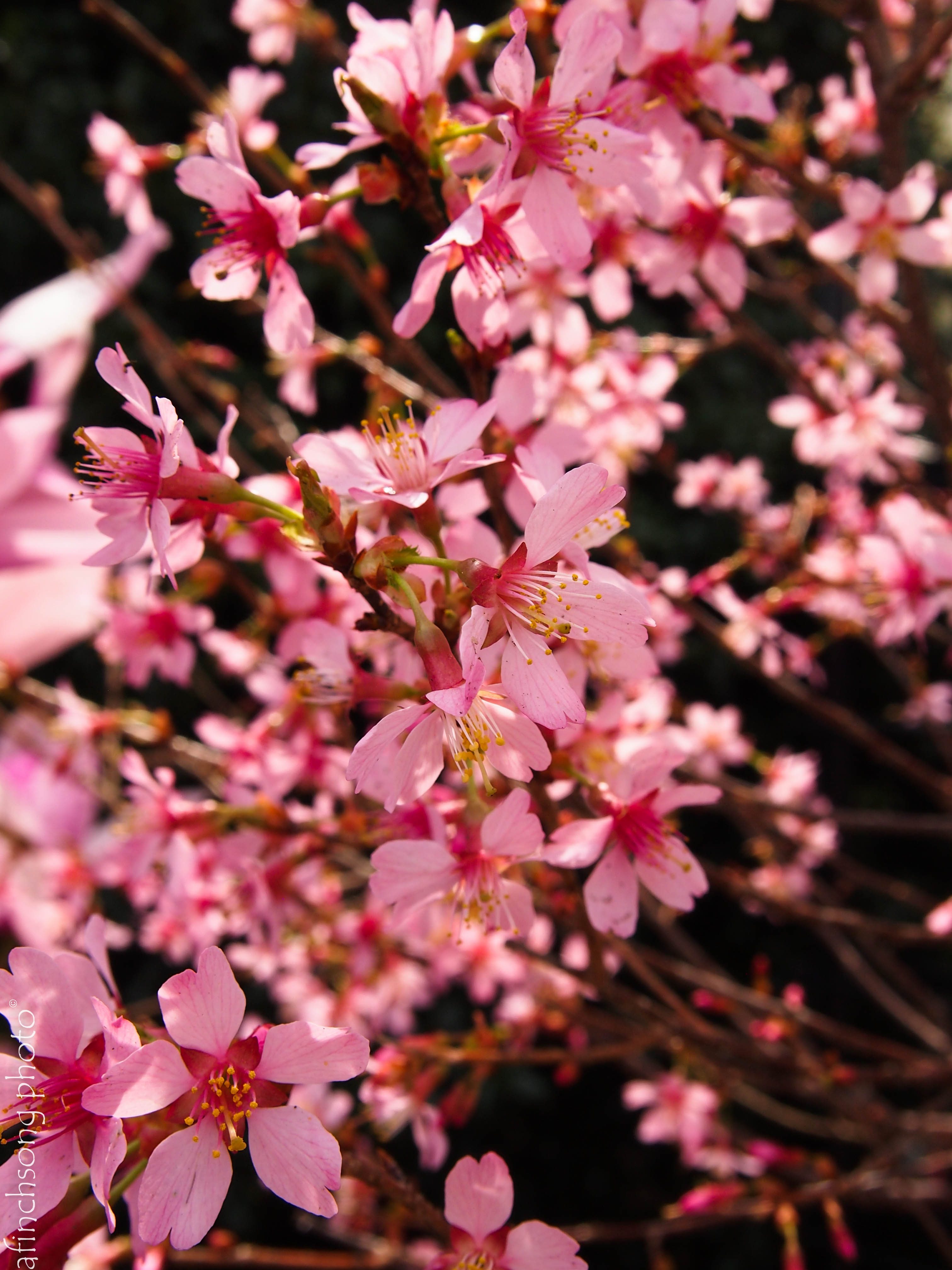 Free photo pink petaled flowers on brown roof near green leaves pink petaled flowers on brown roof near green leaves tree mightylinksfo
