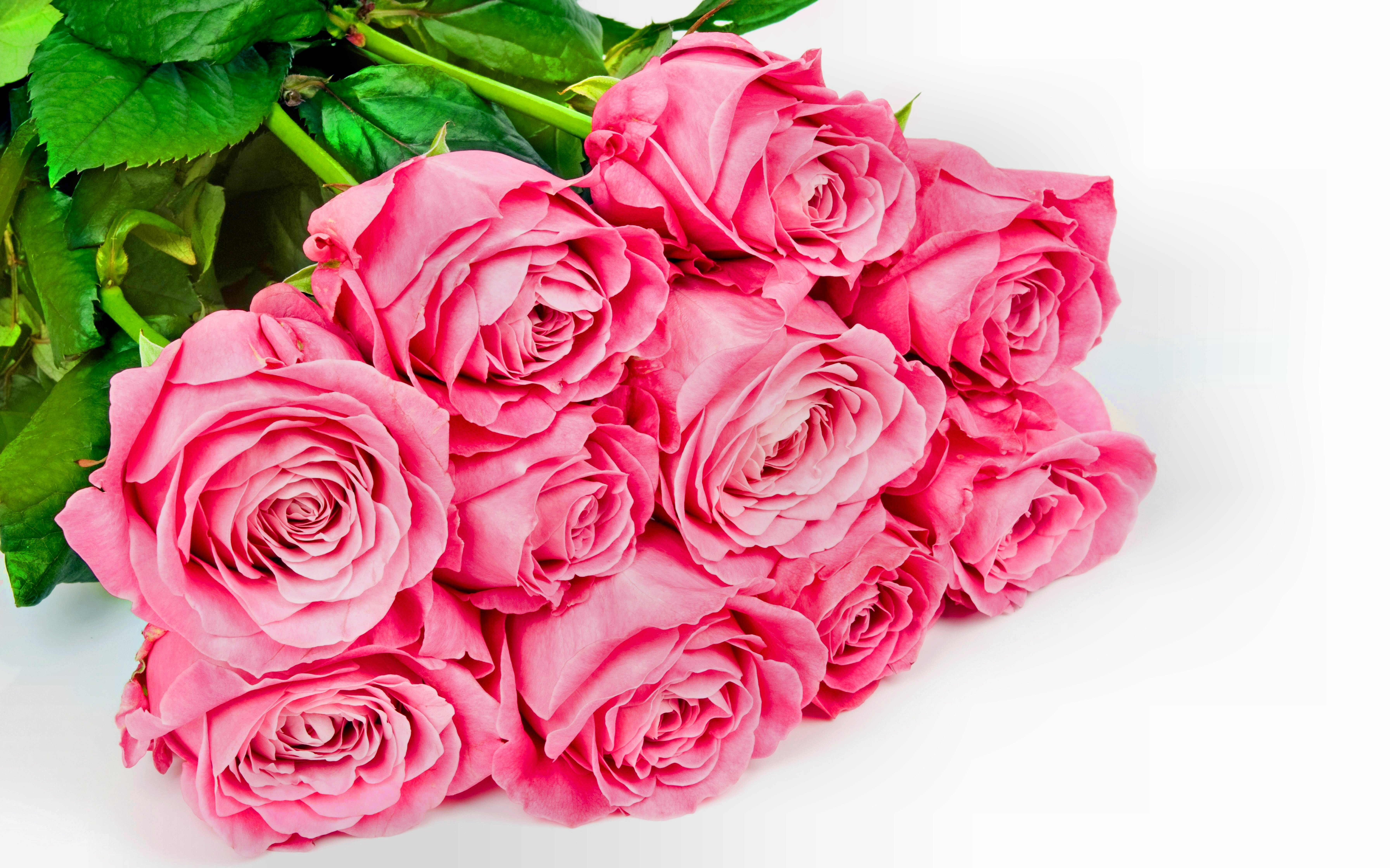 144 Pink Rose HD Wallpapers | Background Images - Wallpaper Abyss