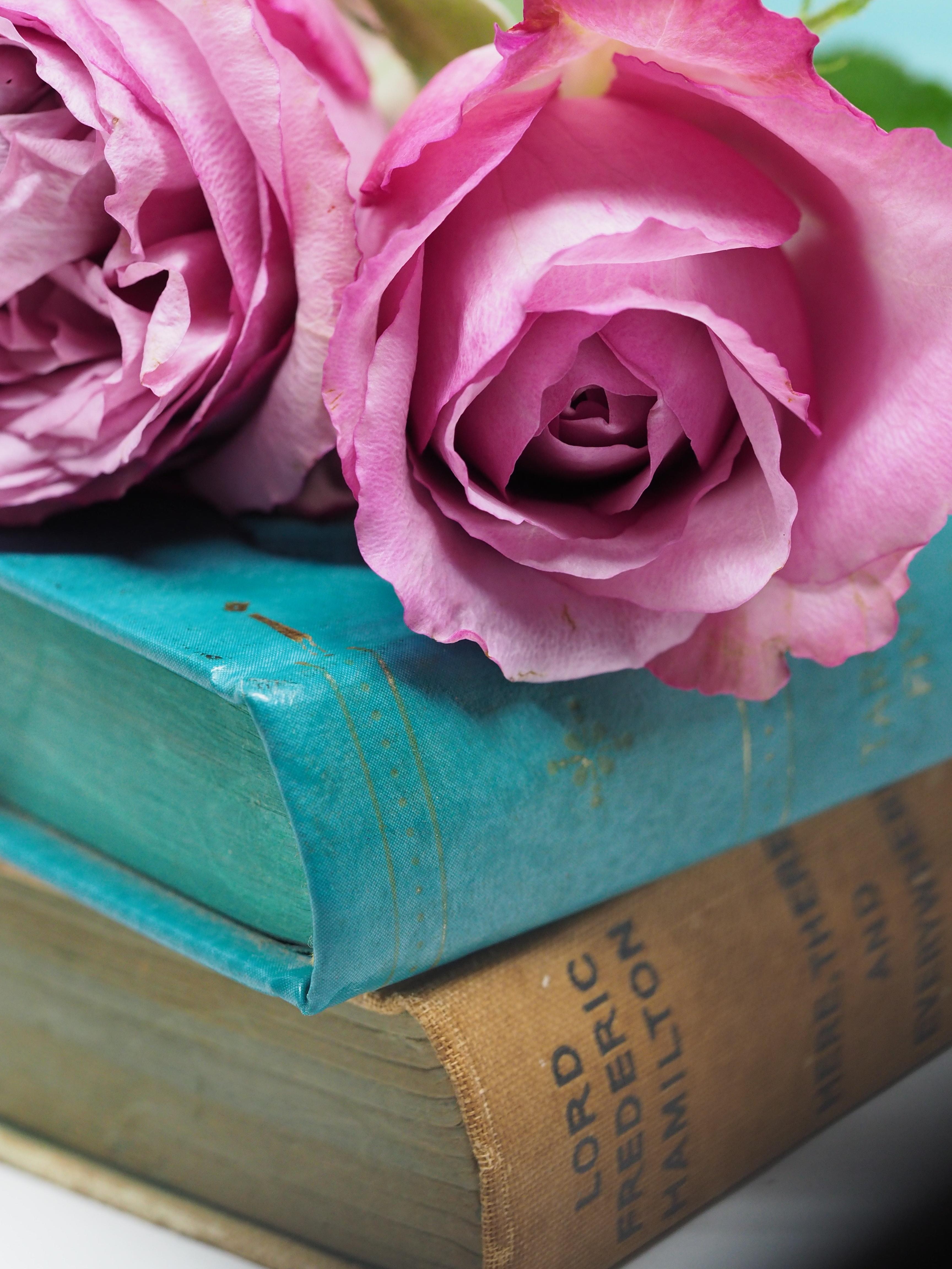 Pink rose flower on blue hardbound books photo