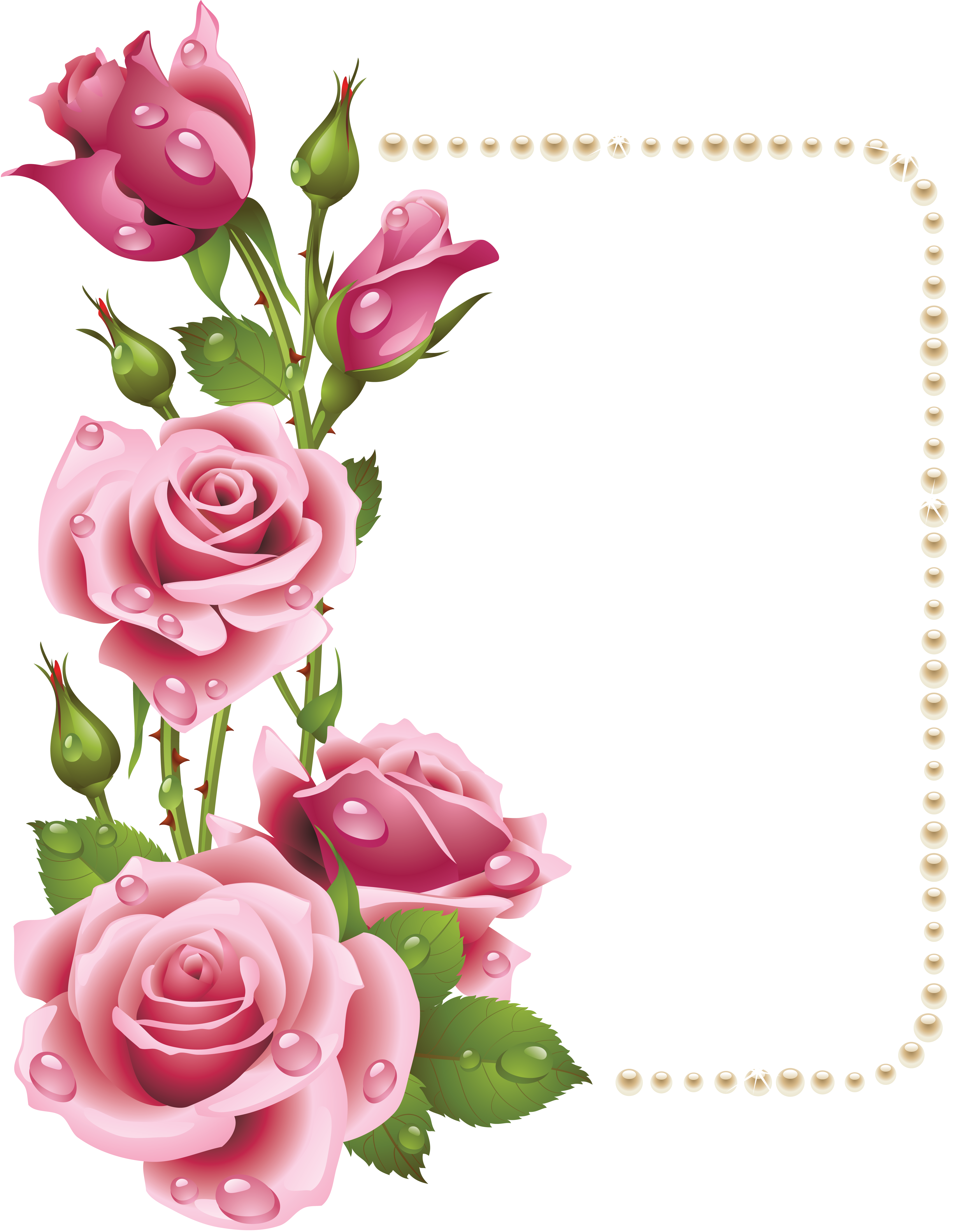 Free photo: Rose page Border - nature, plant, roses - Non-Commercial ...