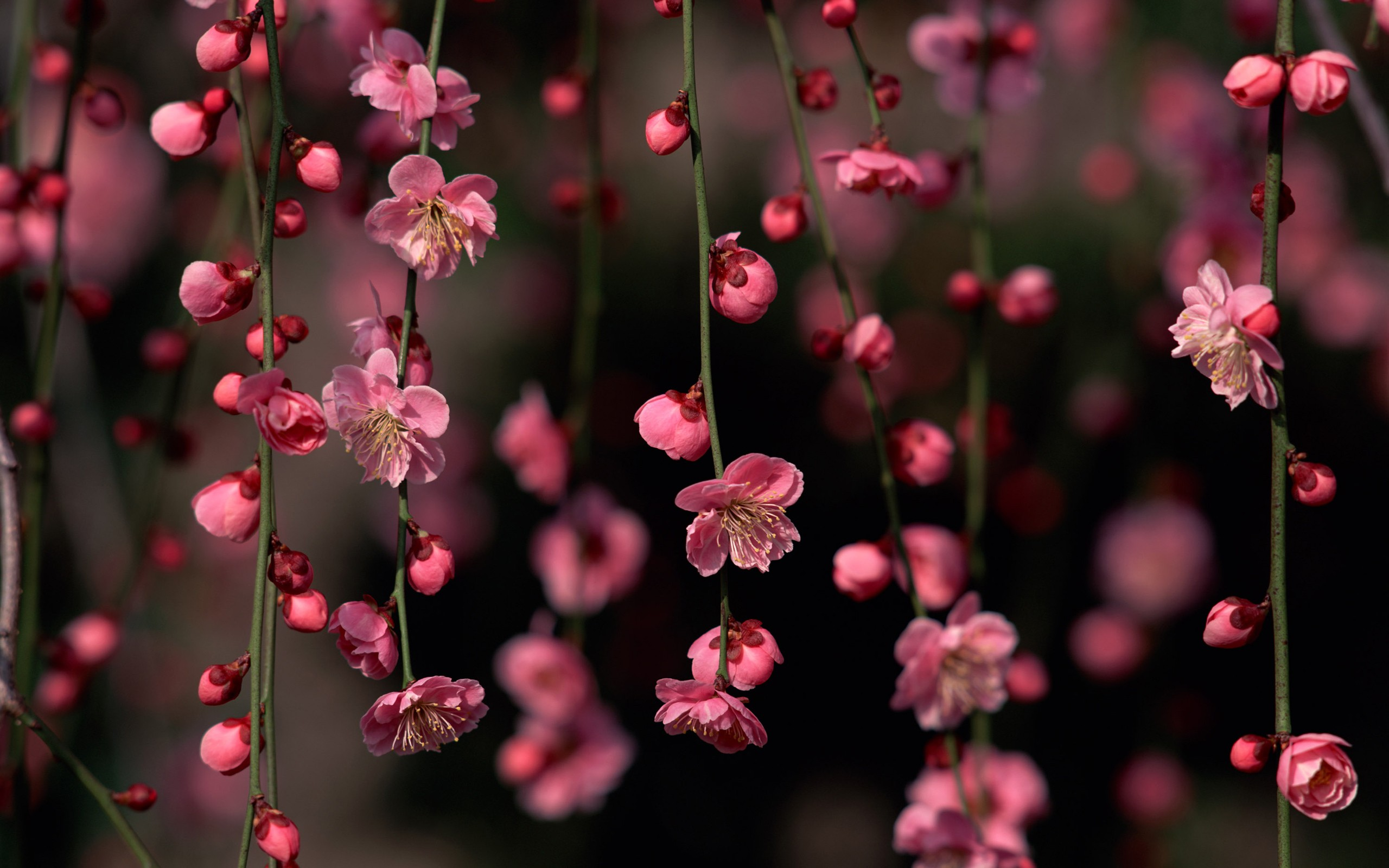 Free photo pink spring flowers pink park macro free download pink spring flowers izmirmasajfo