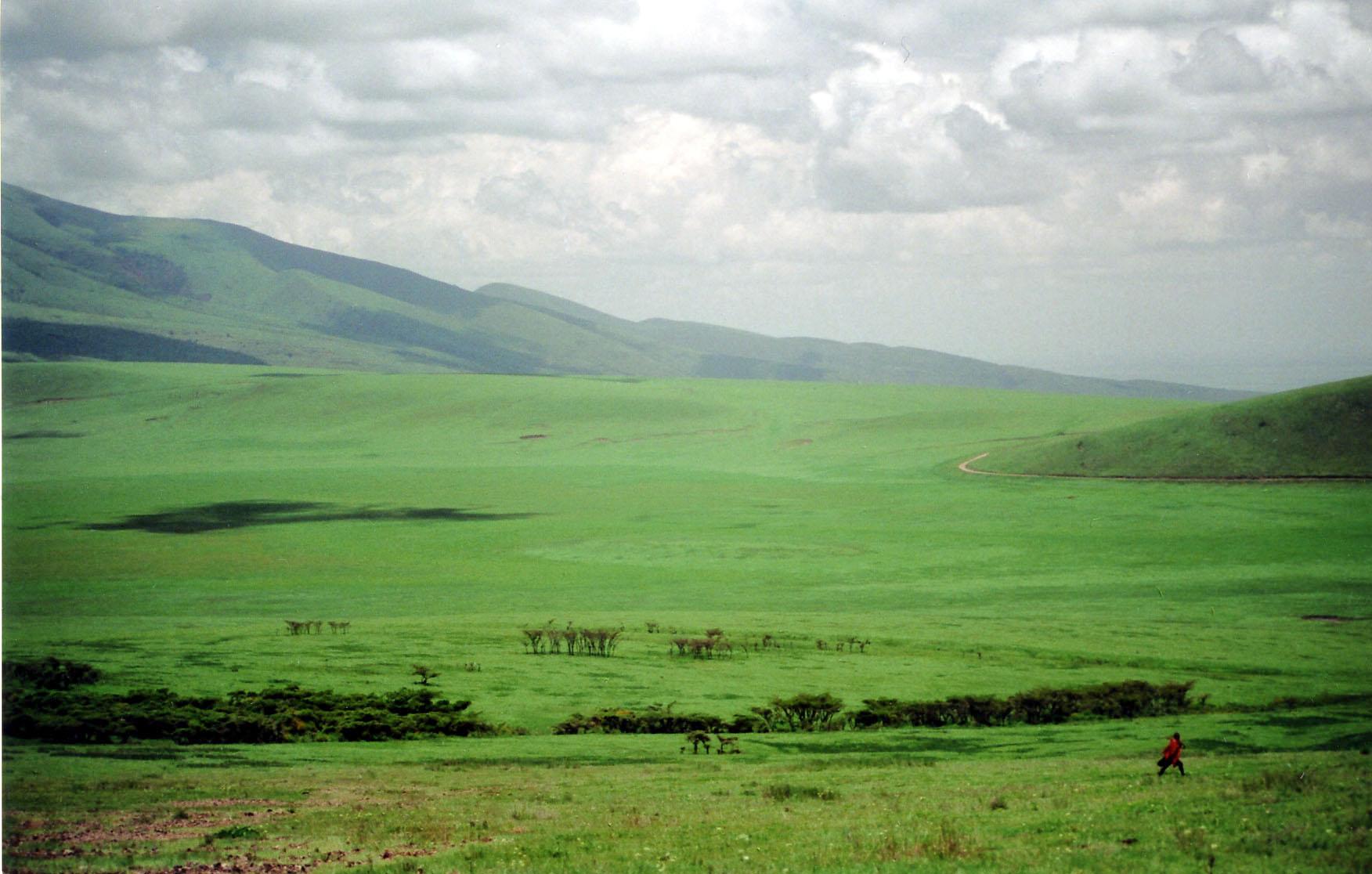 wild grassland encounters « Blog of Holding