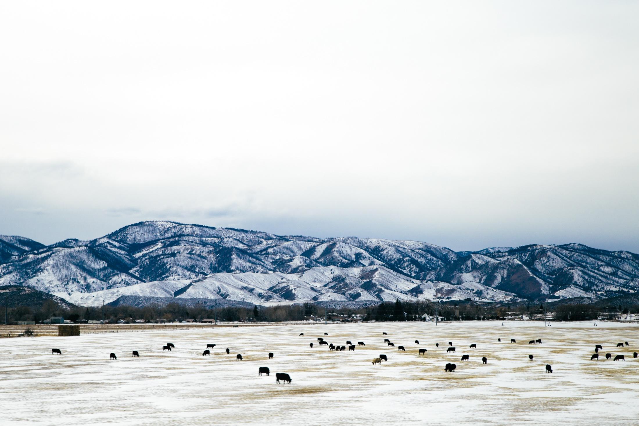 Plain, Animal, Cloud, Cloudy, Feed, HQ Photo
