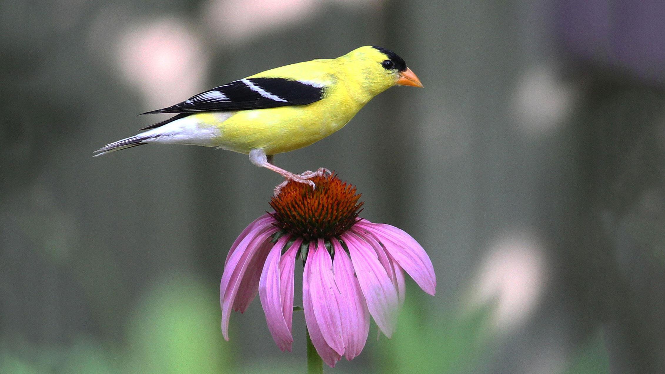 Native Plants | Audubon