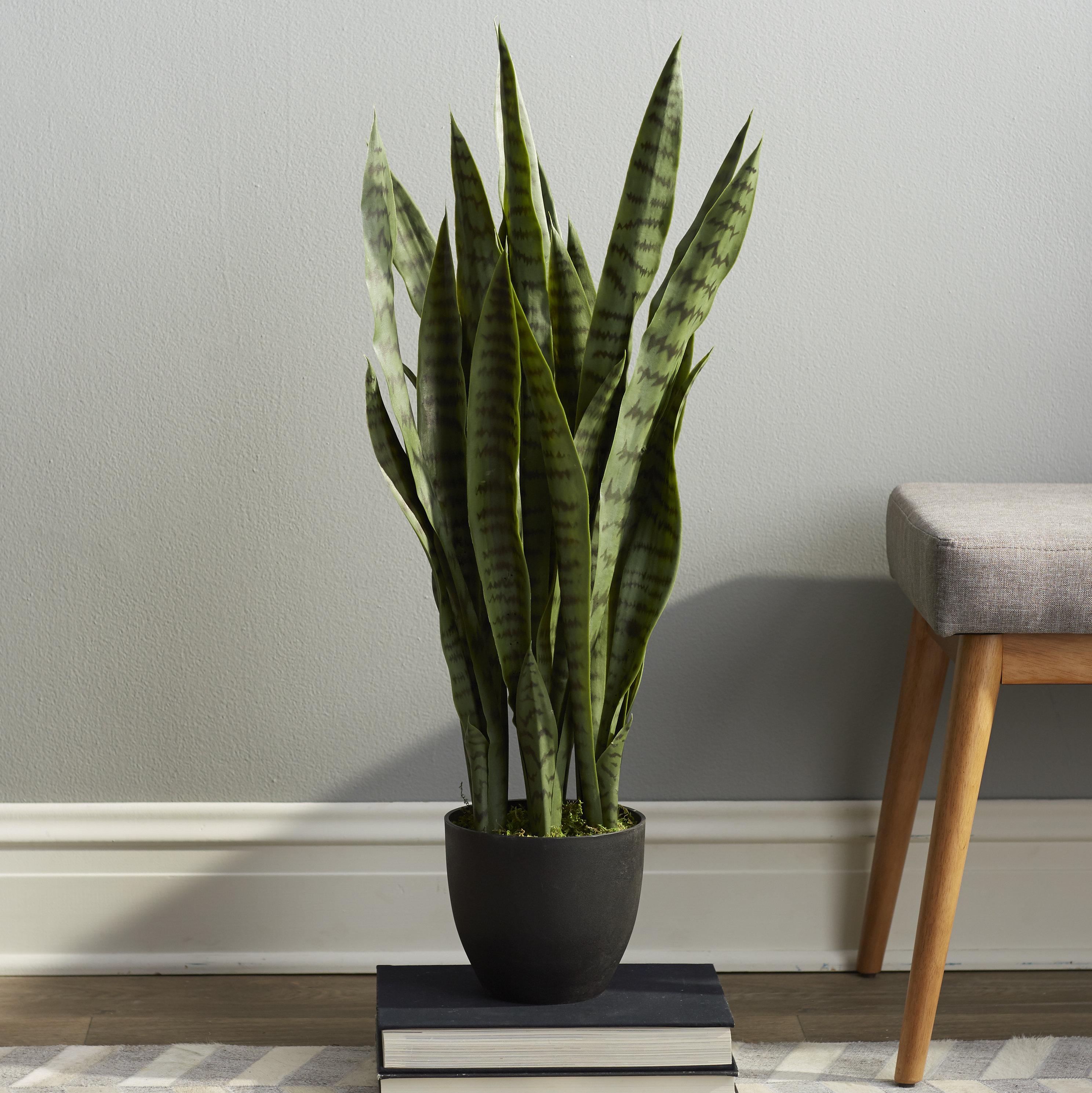 Plant in pot photo