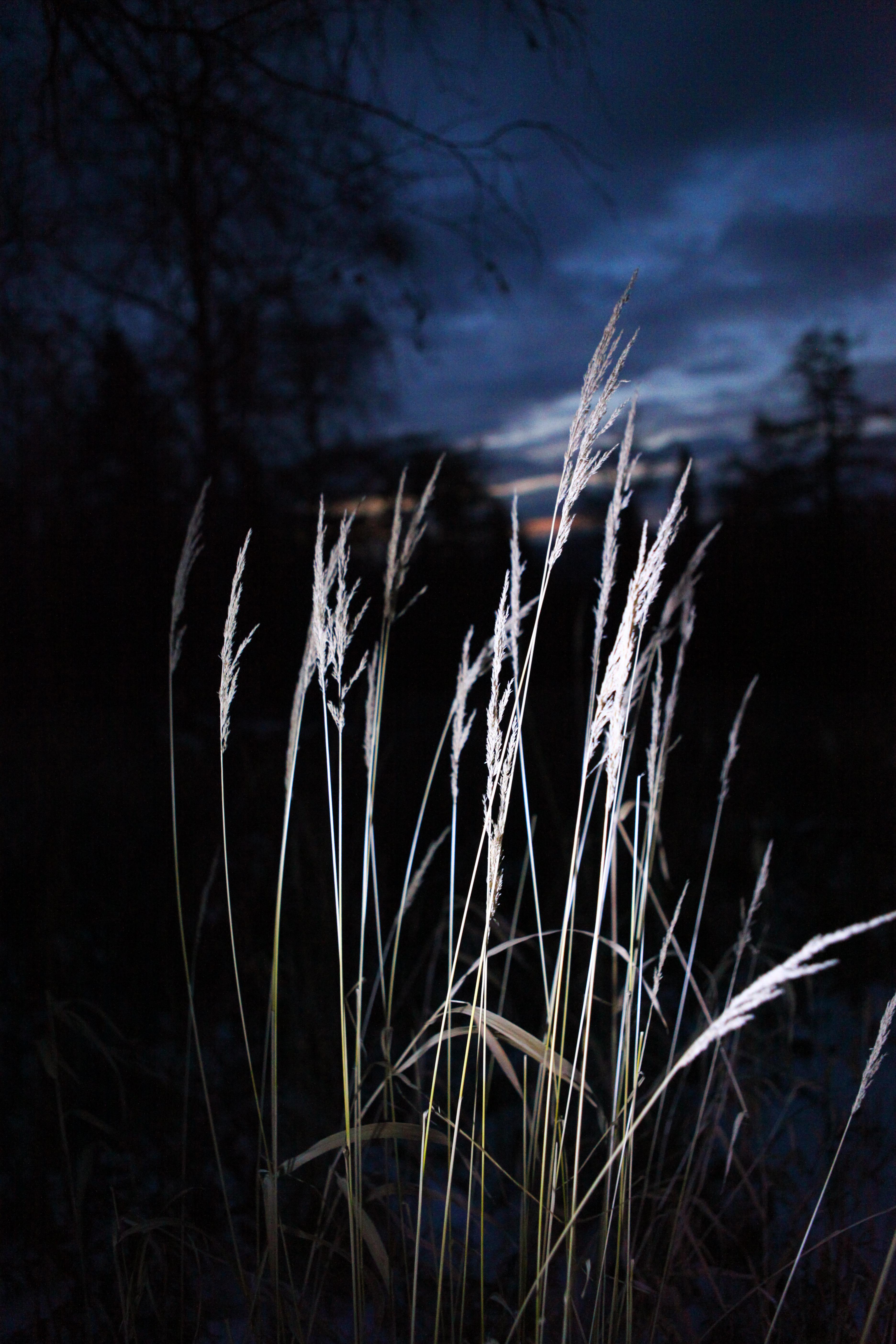Plant, Dark, Dusk, Gloomy, Grass, HQ Photo