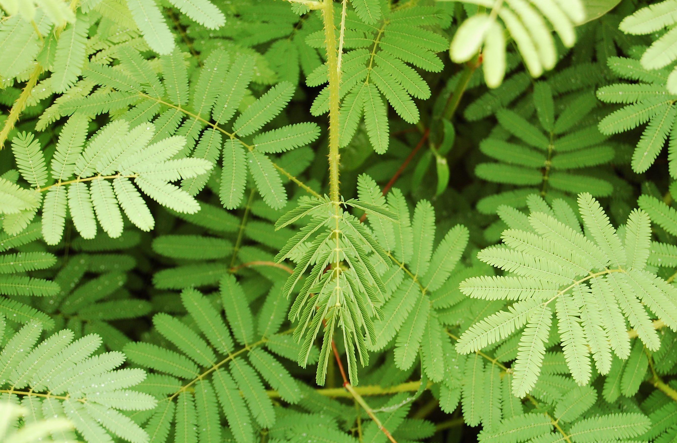 Article: The Intelligent Plant – awkward botany