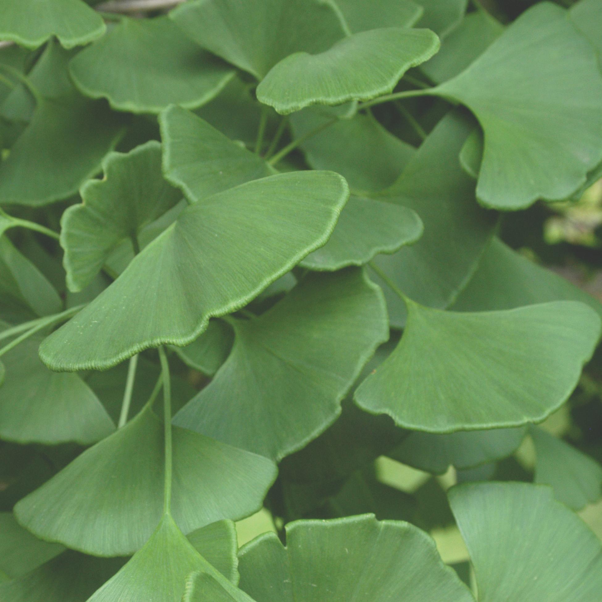 Plant Database