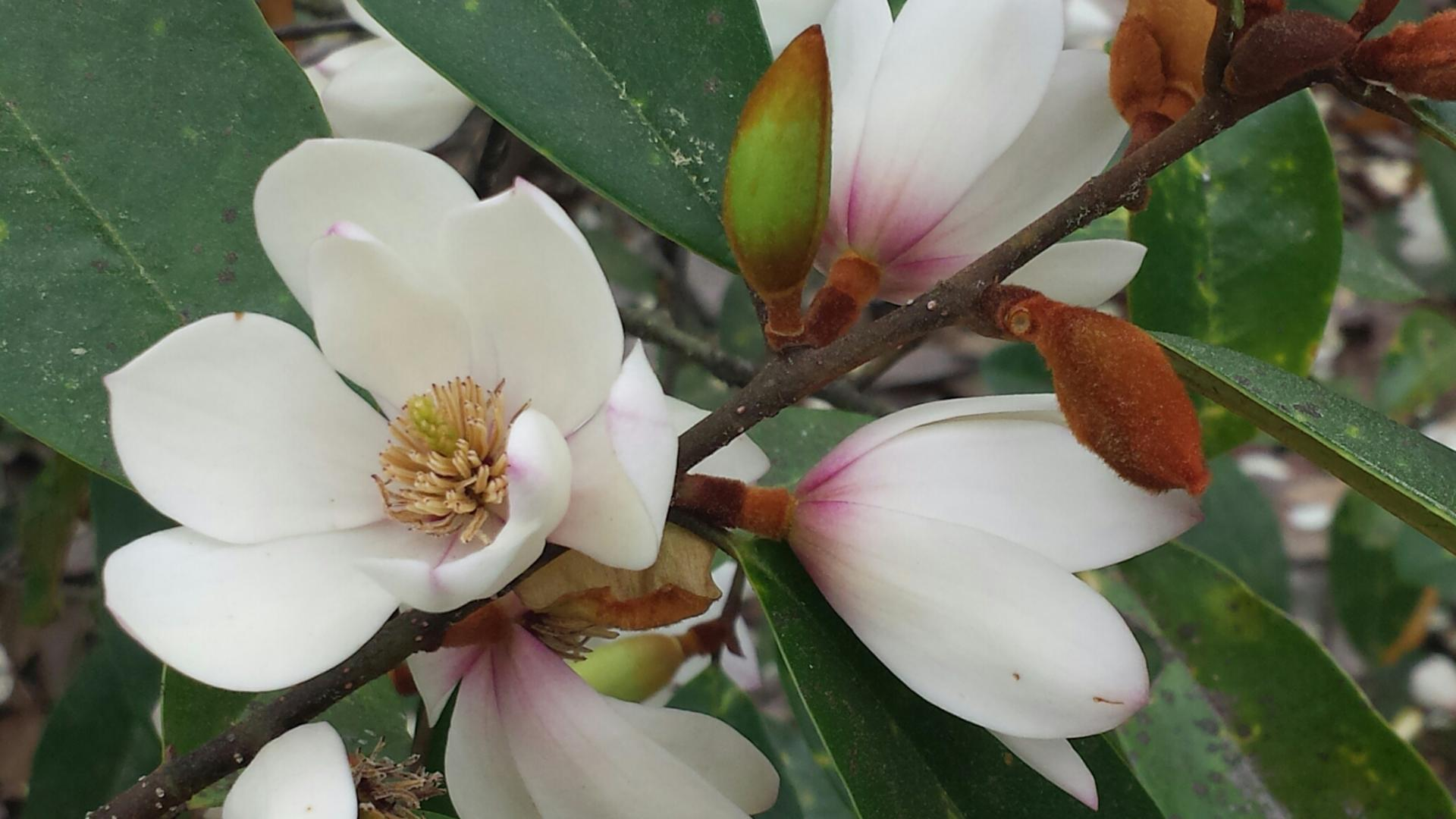 About the Plant Collections Network | American Public Gardens ...