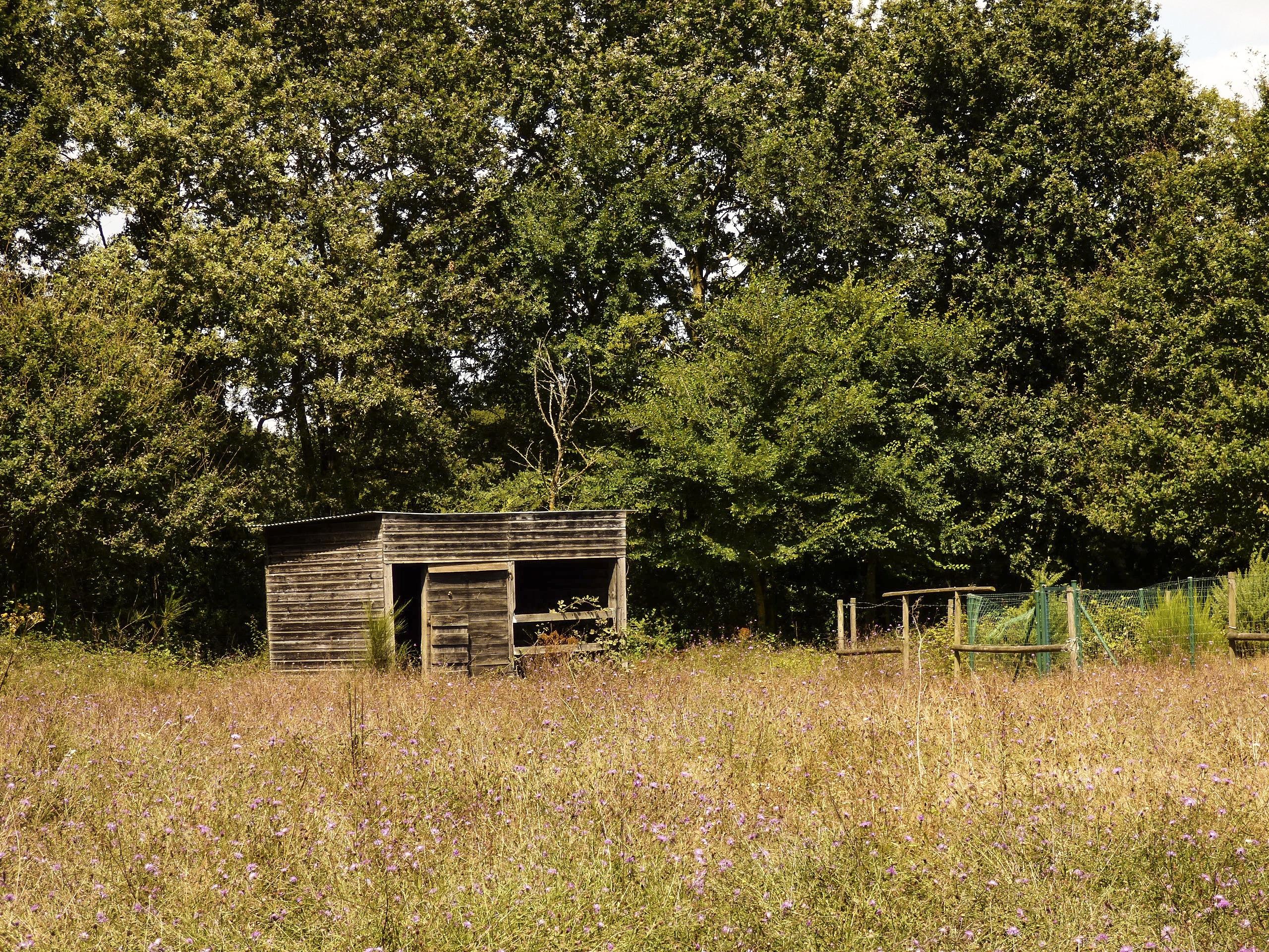 Plant covered shack photo