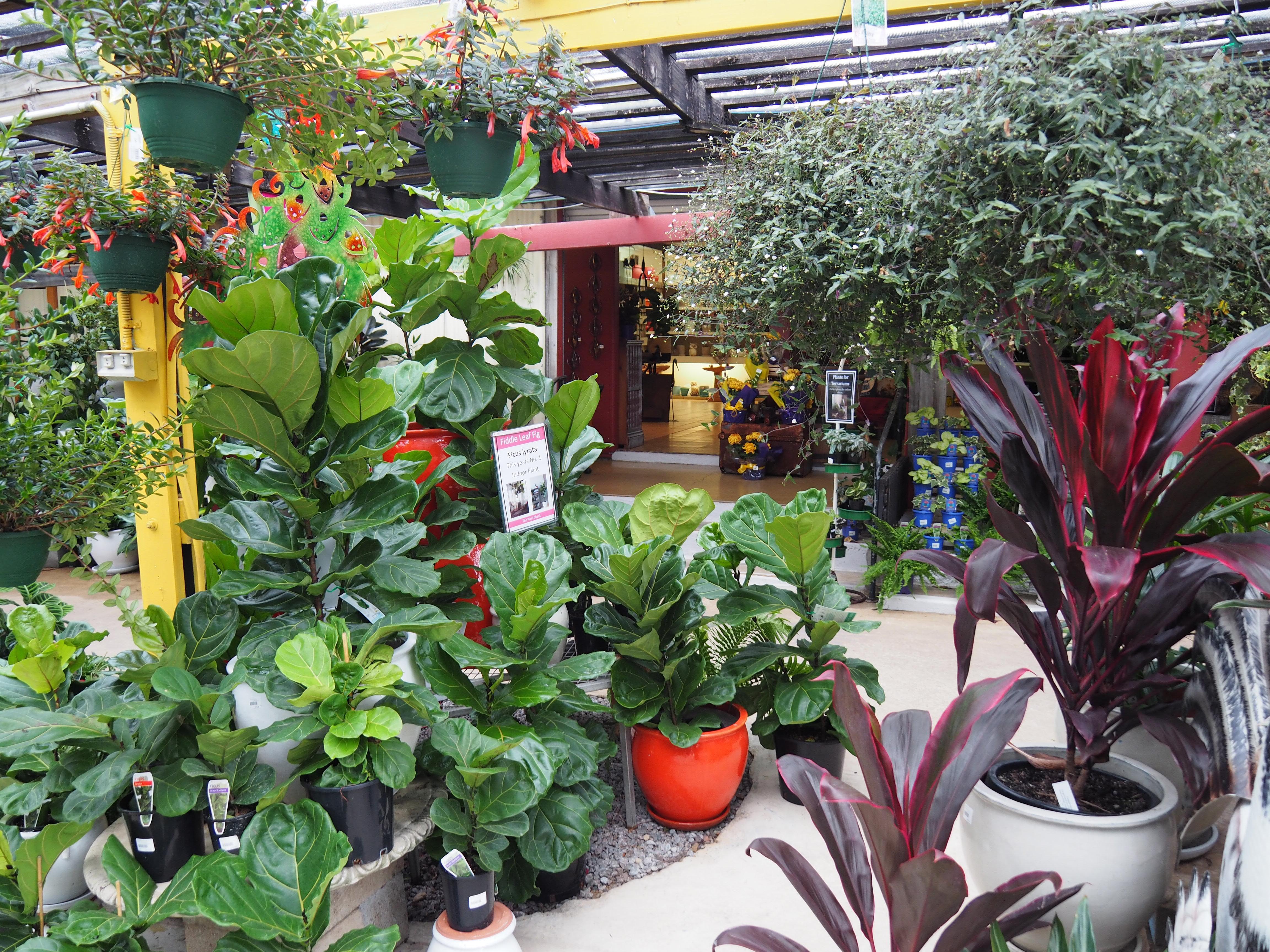 The Plant Shack - Brisbane