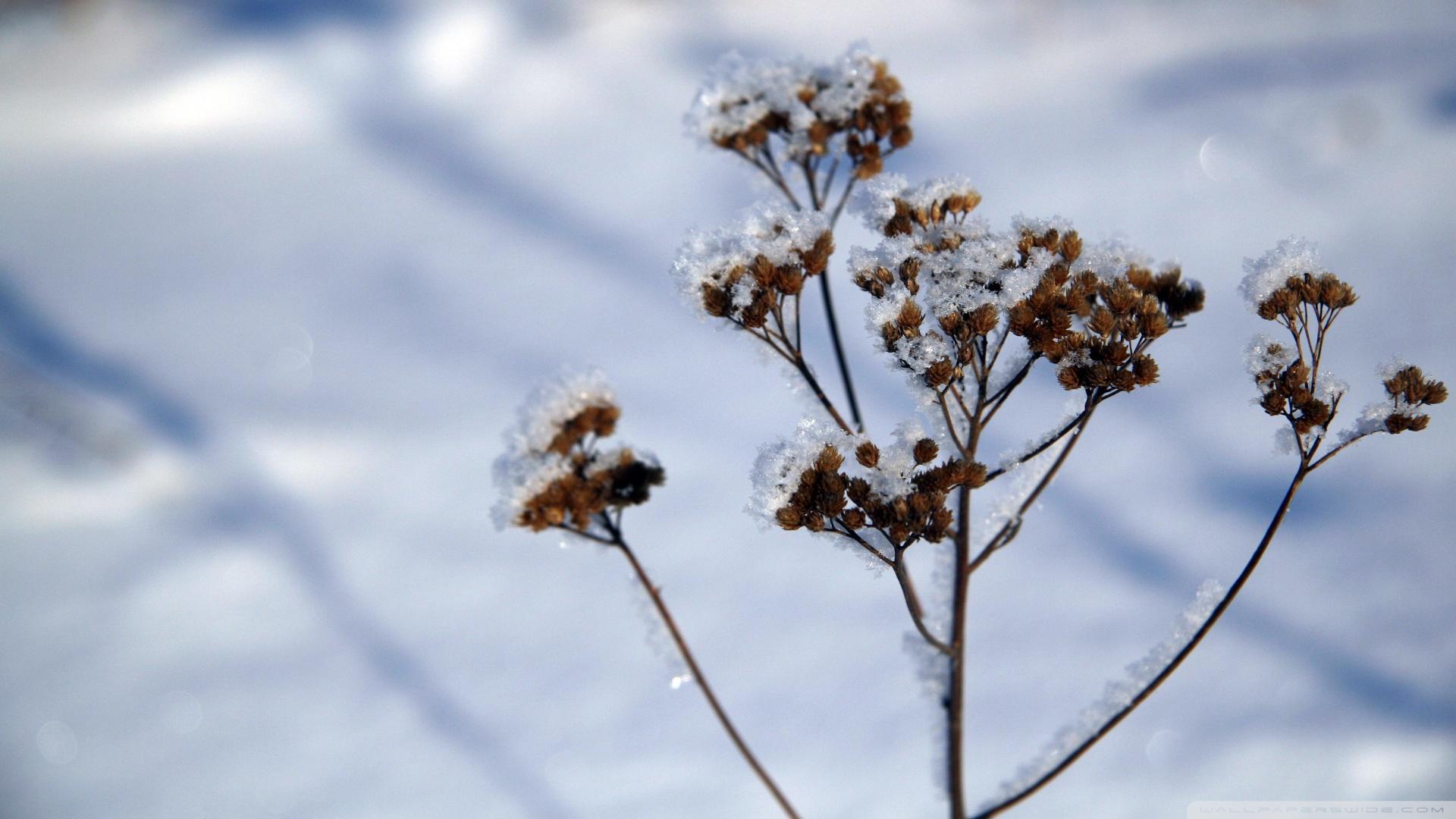 Plant in winter photo