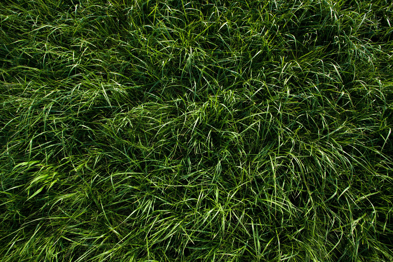 Free plant textures | Wild Textures