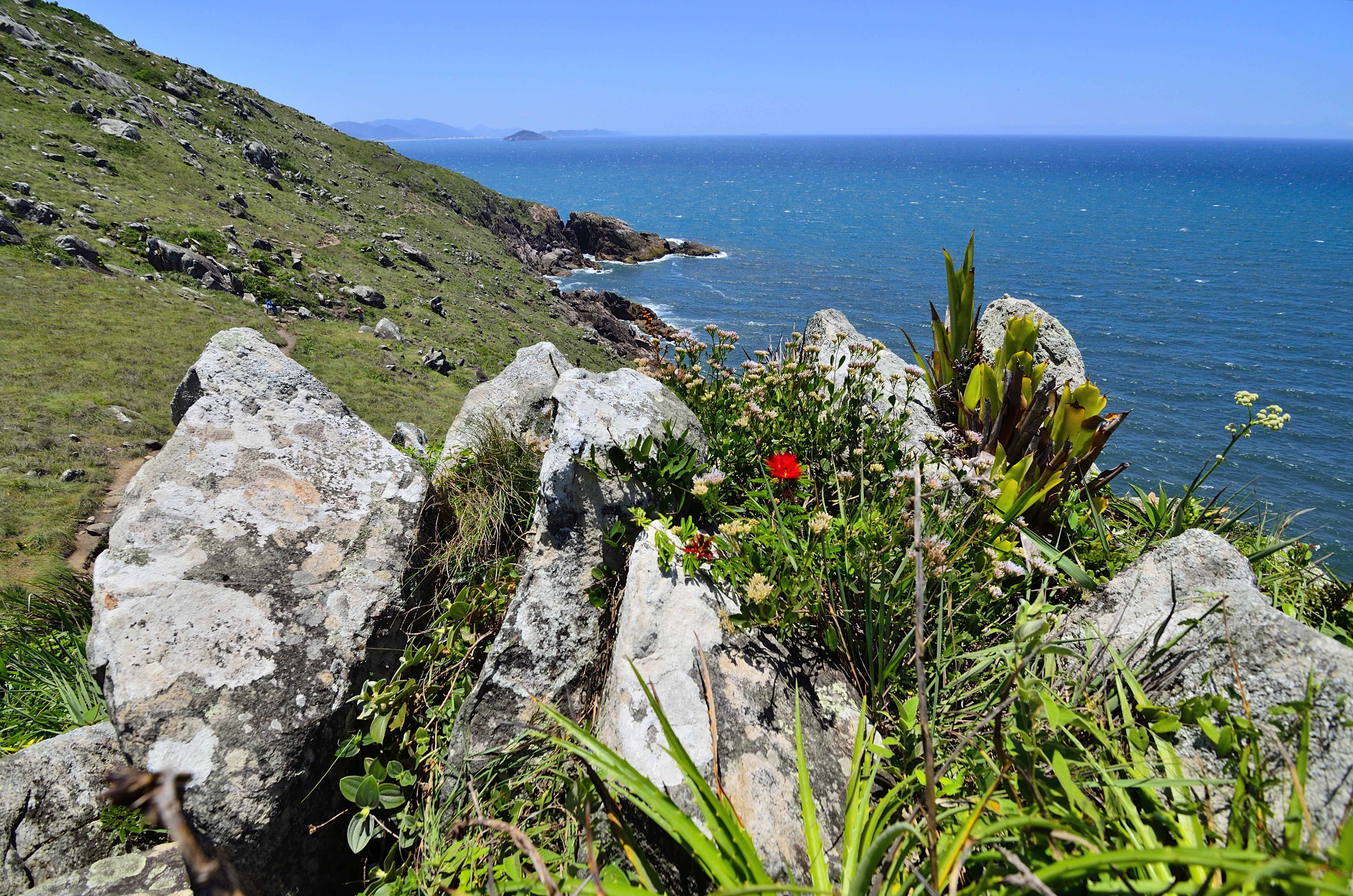 Plantas y piedras, DA, Morro, Outdoor, Paisaje, HQ Photo