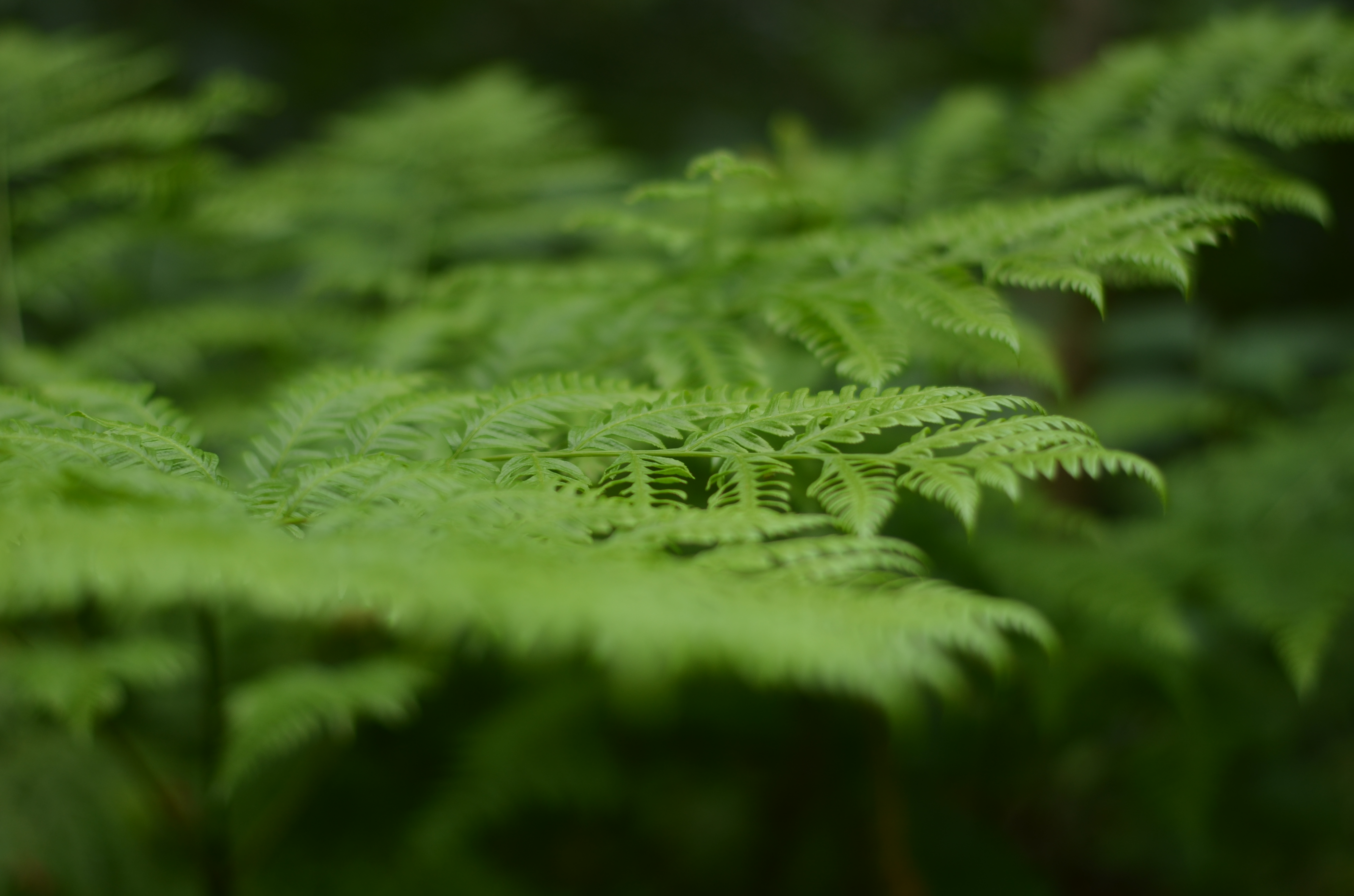 Plants, Leave, Green, Aroma, HQ Photo