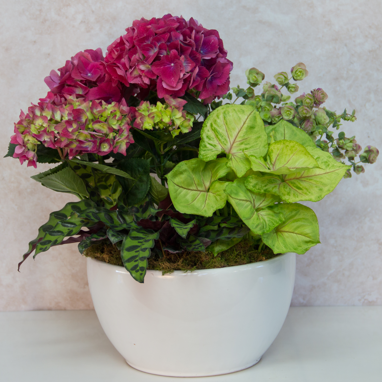 Plants   Indoor & Outdoor Plants   McArdle's Garden Center ...