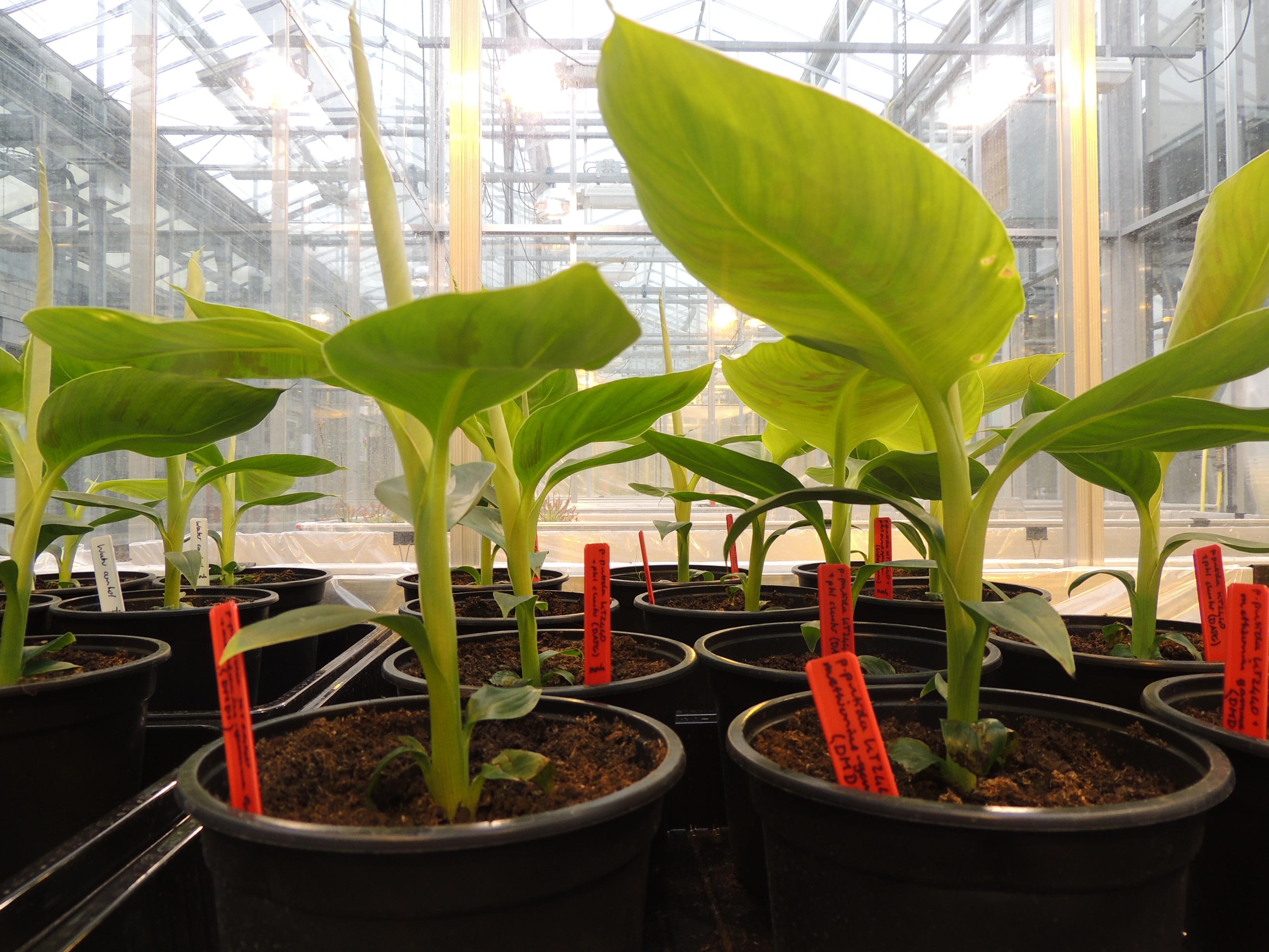 Team:Wageningen UR/project/greenhouse - 2014.igem.org