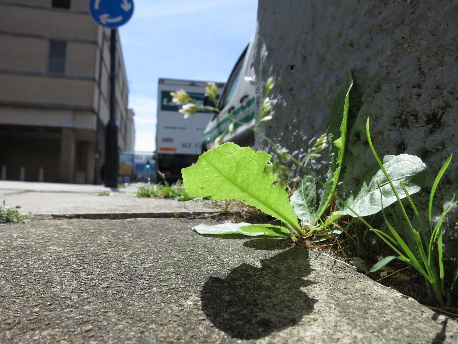 Plants in southampton photo