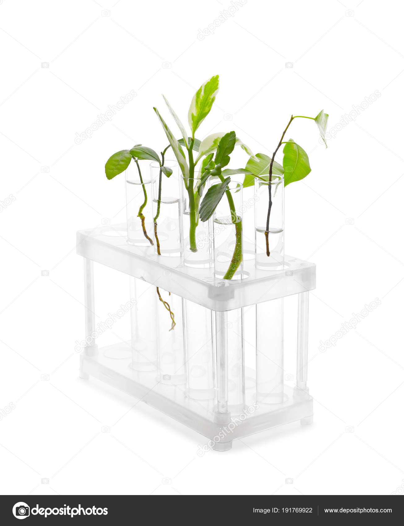 Test tubes with plants in stand on white background — Stock Photo ...