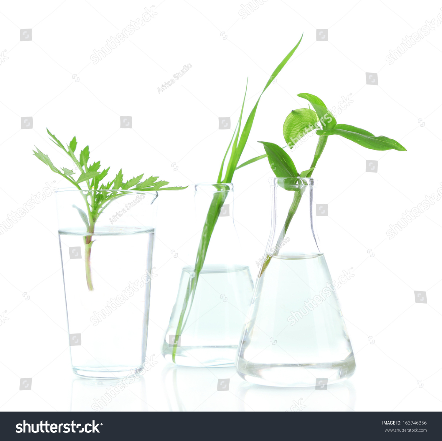 Plants Test Tubes Isolated On White Stock Photo 163746356 - Shutterstock