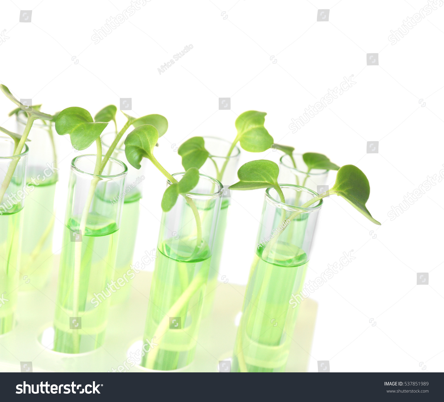 Plants Test Tubes On Light Background Stock Photo (Royalty Free ...