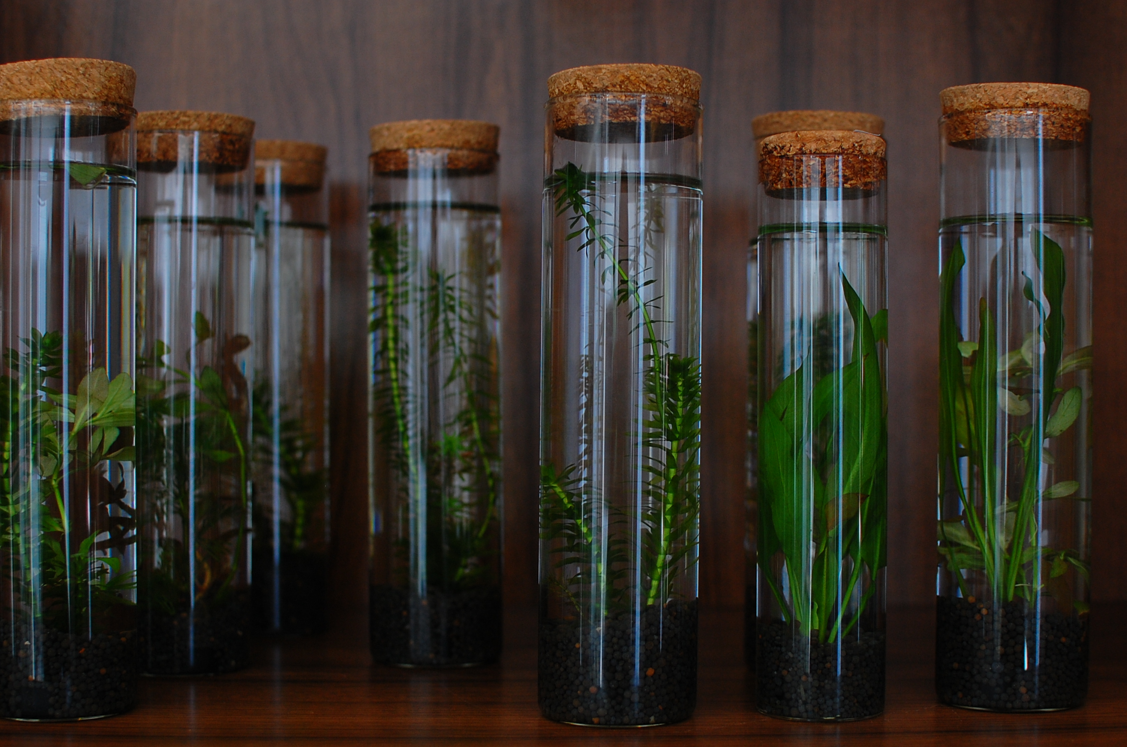 Plants in Tubes, Experiment, Green, Leaves, Plants, HQ Photo