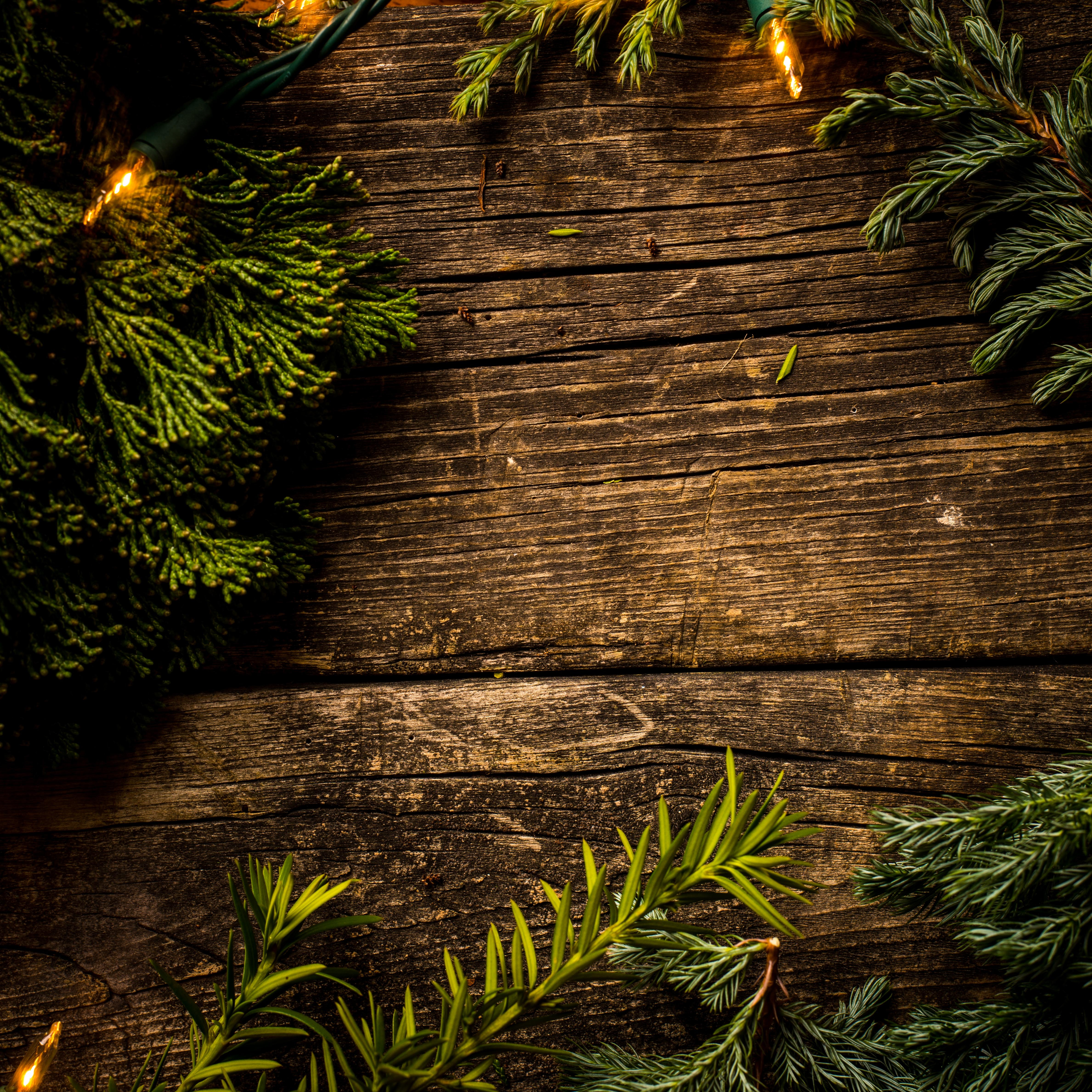 Plants on top of the Wooden Surface, Branch, Color, Coniferous, Conifers, HQ Photo