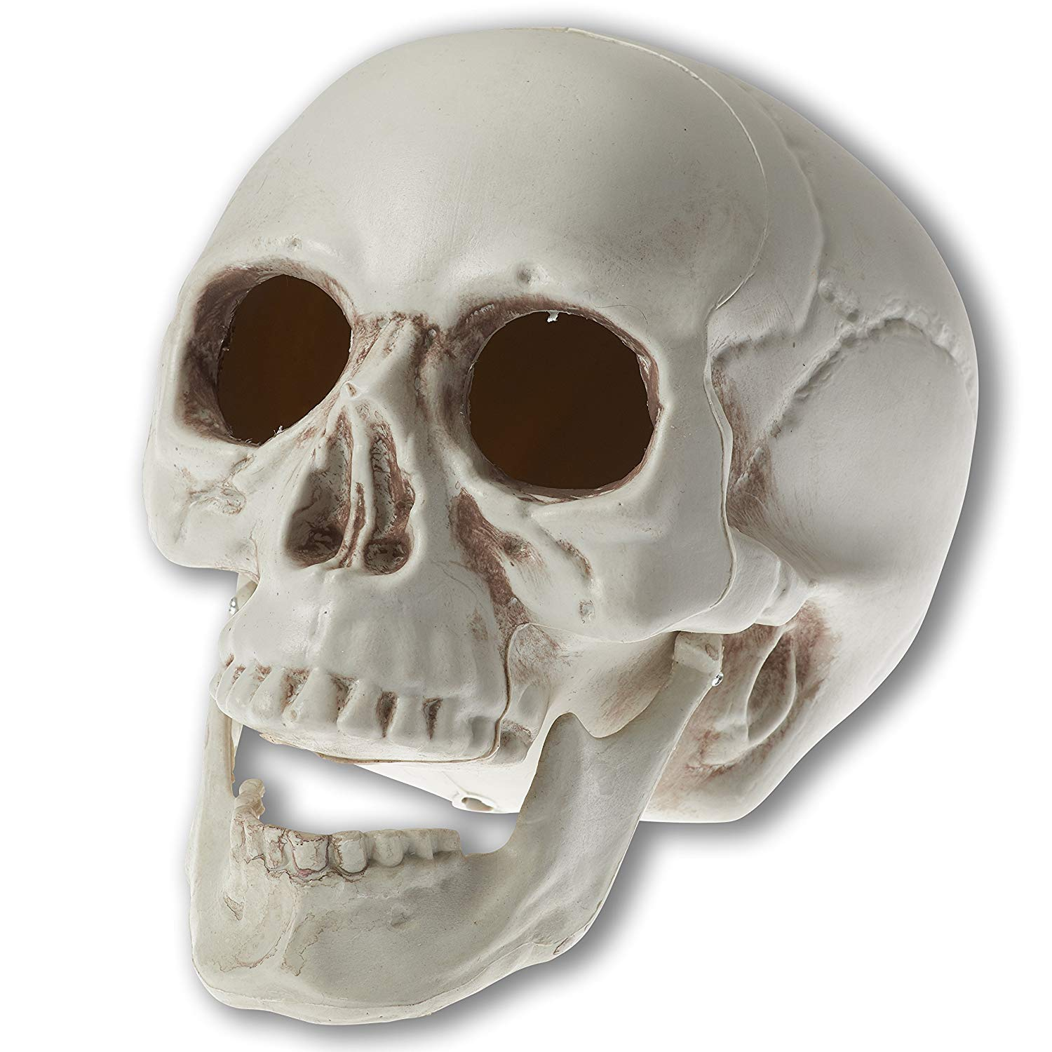 Amazon.com: Prextex 6.5 inch Realistic Looking Skeleton Skull for ...